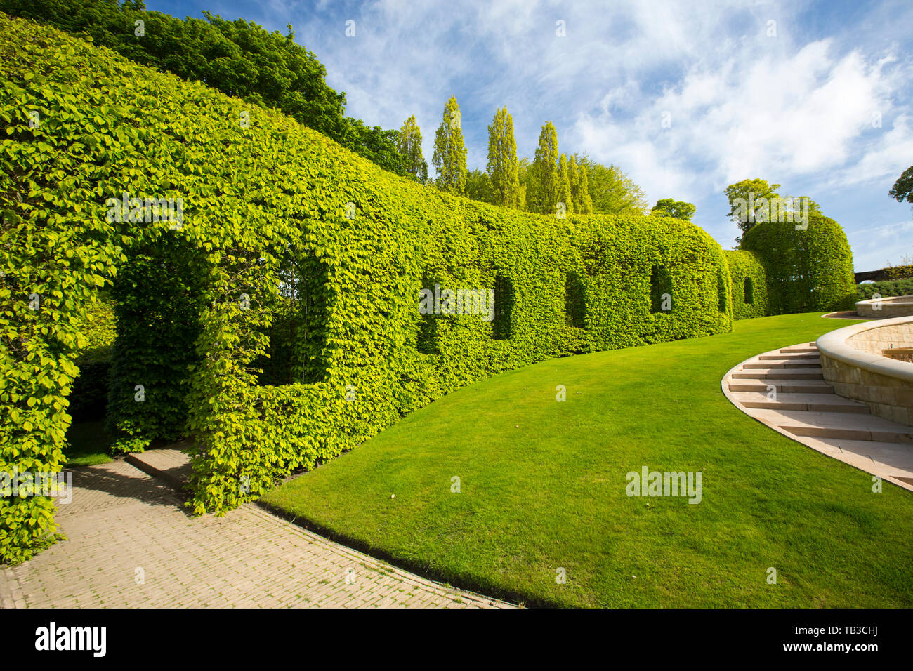 A Hornbeam Tunnel Hedge At Alnwick Castle Gardens Northumberland