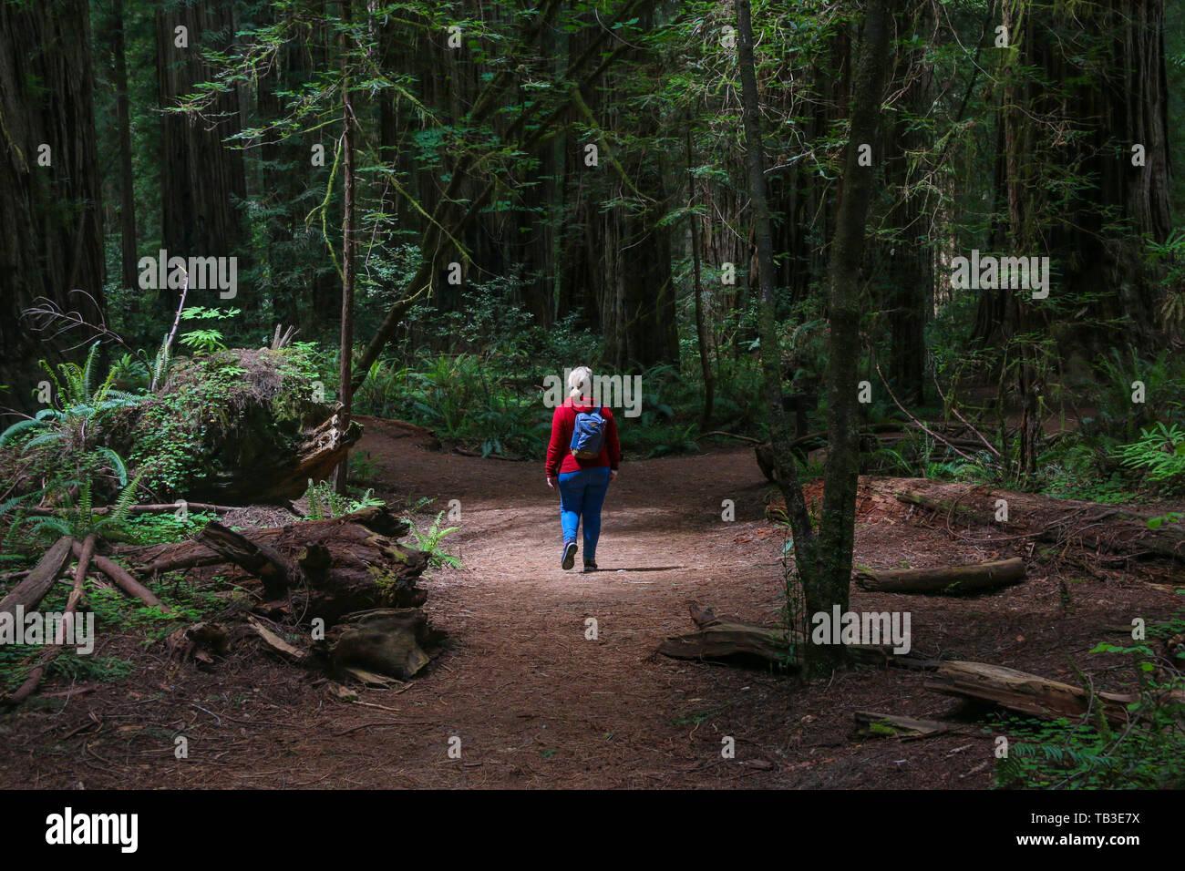 Stout Memorial Grove, California Redwoods - Stock Image