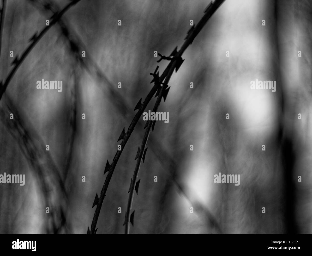 barbed wire against a cloudy sky, Moscow - Stock Image