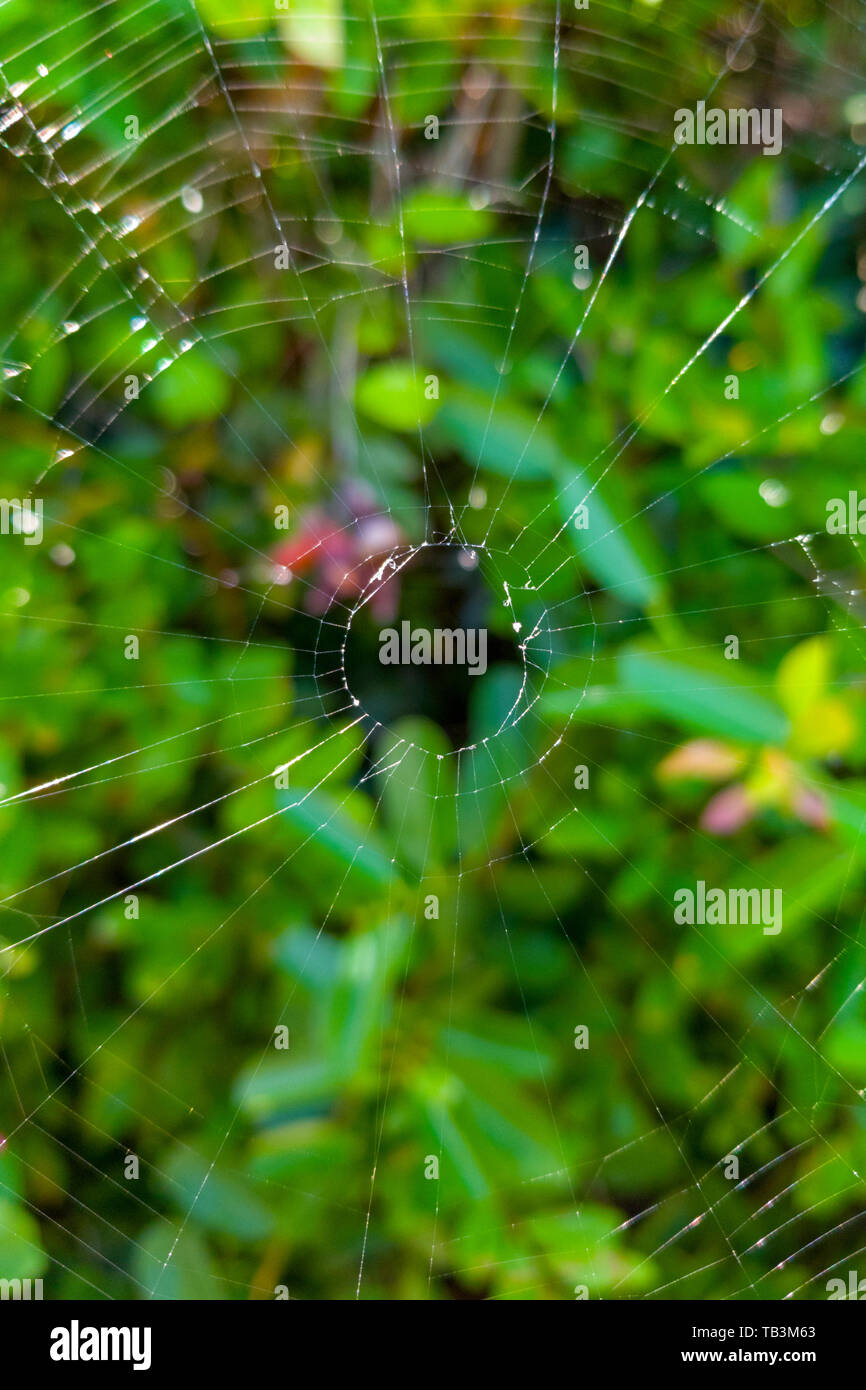 spider web on the plants of a garden - Stock Image