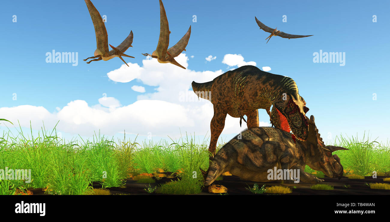 With a vicious neck bite an Albertosaurus attacks Albertaceratops to disable the dinosaur as Pteranodons fly over like vultures. Stock Photo