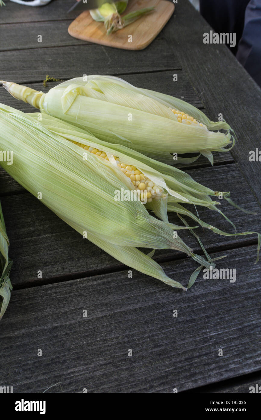 'Fresh Ears of Corn in Husks with Silk' - Stock Image