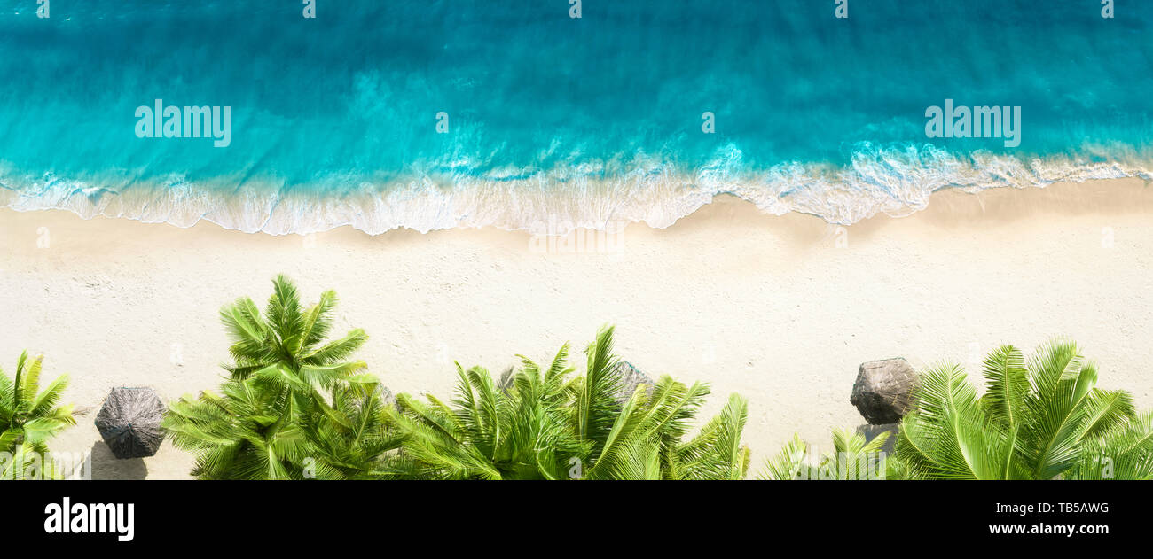 Aerial top view on sand beach,palm tree and ocean - Stock Image