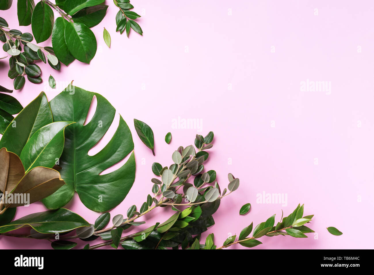 Creative Layout Made Of Tropical Green Leaves On Pink Background Flat Lay Top View Summer Or Spring Nature Concept Blank For Advertising Card Or I Stock Photo Alamy Green plant leaf landscape canvas painting art a painting,an inspiration download premium illustration of rectangle golden frame on a tropical background by adj about. alamy