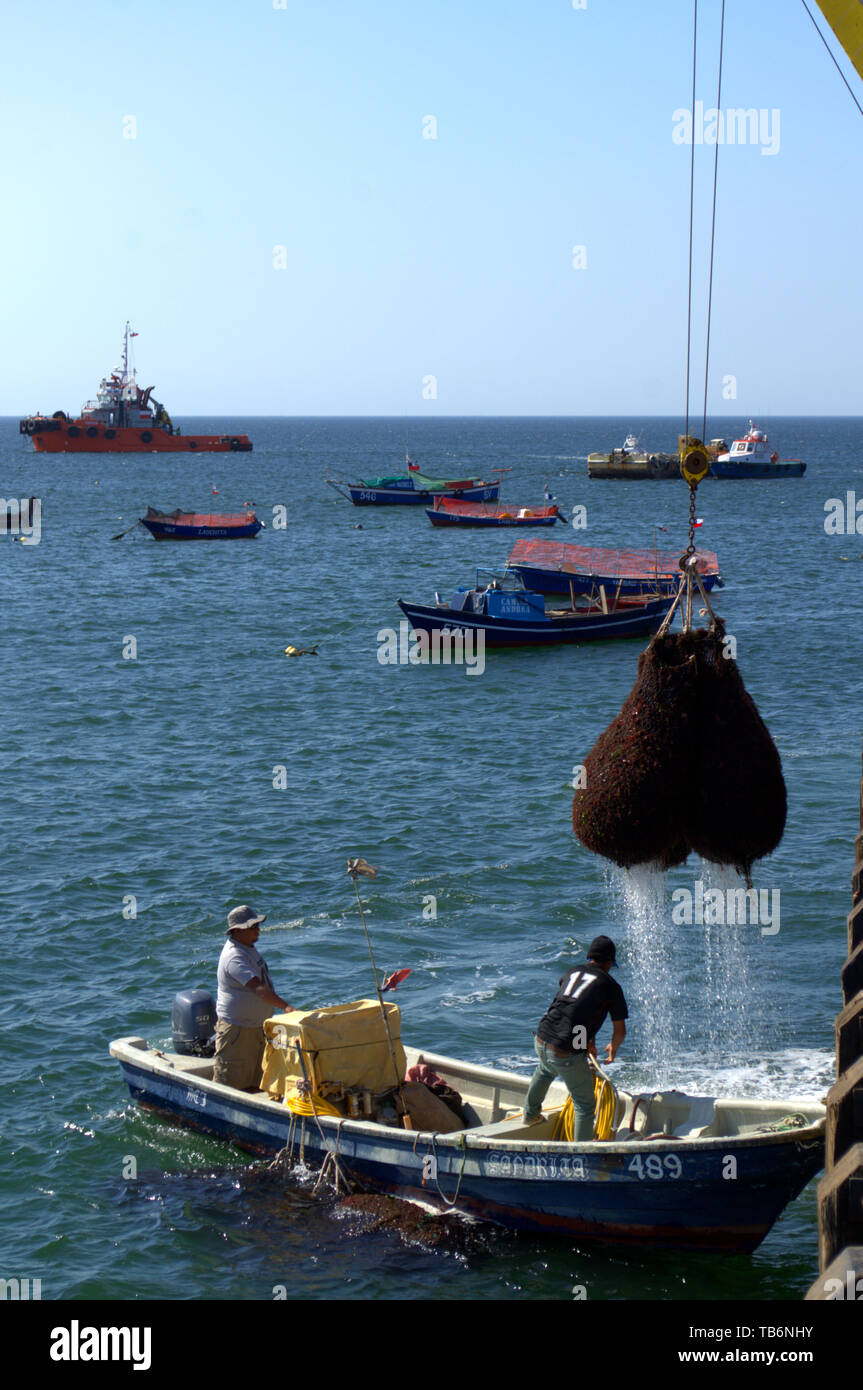 Trawl Stock Photos & Trawl Stock Images - Alamy