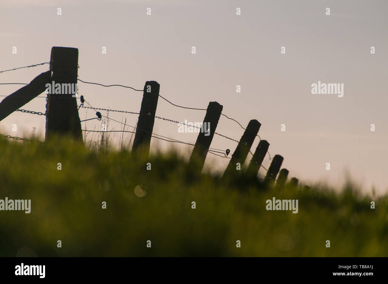Barbed wire fence in belgium - Stock Image