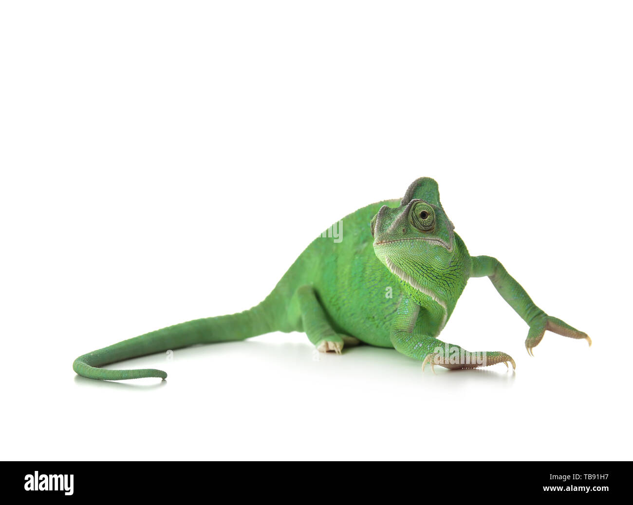 Cute green chameleon on white background Stock Photo