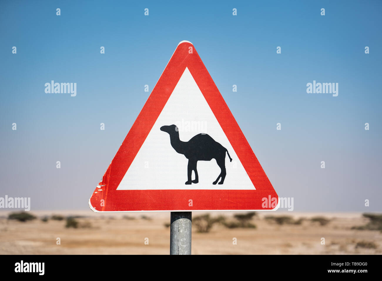 Camel sign  at the edge of the road crossing the desert in israel - Stock Image