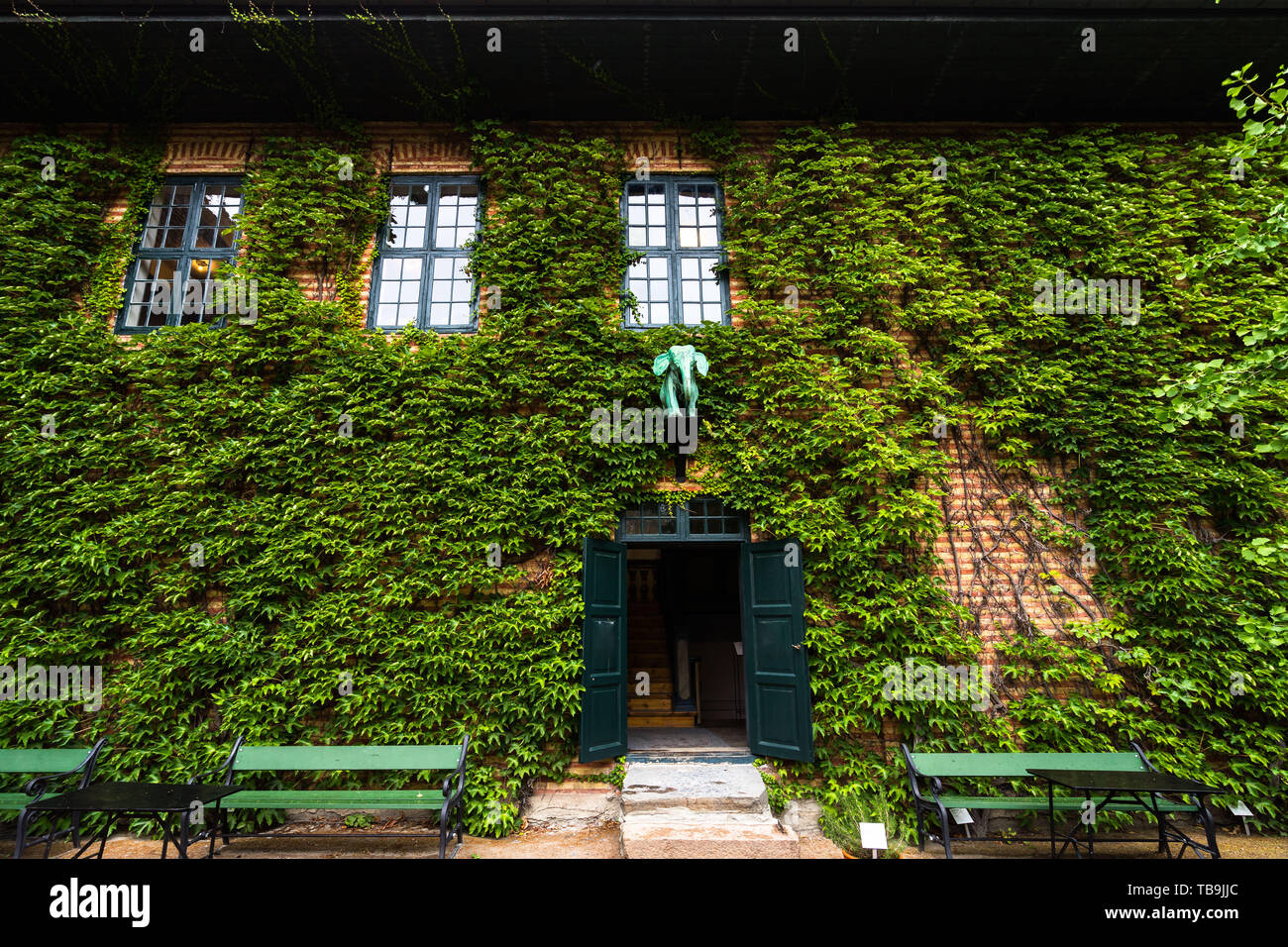 Scenic house facade covered by green ivy at Norsk Folkemuseum (Norwegian Museum of Cultural History), Olso, Norway - Stock Image