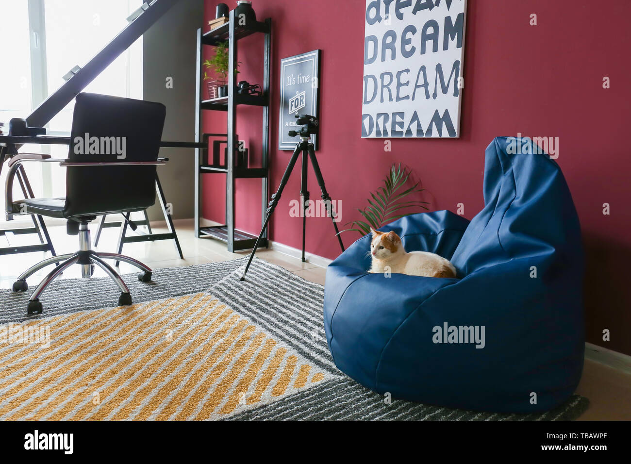 Cute cat sitting on bean bag chair in interior of room - Stock Image
