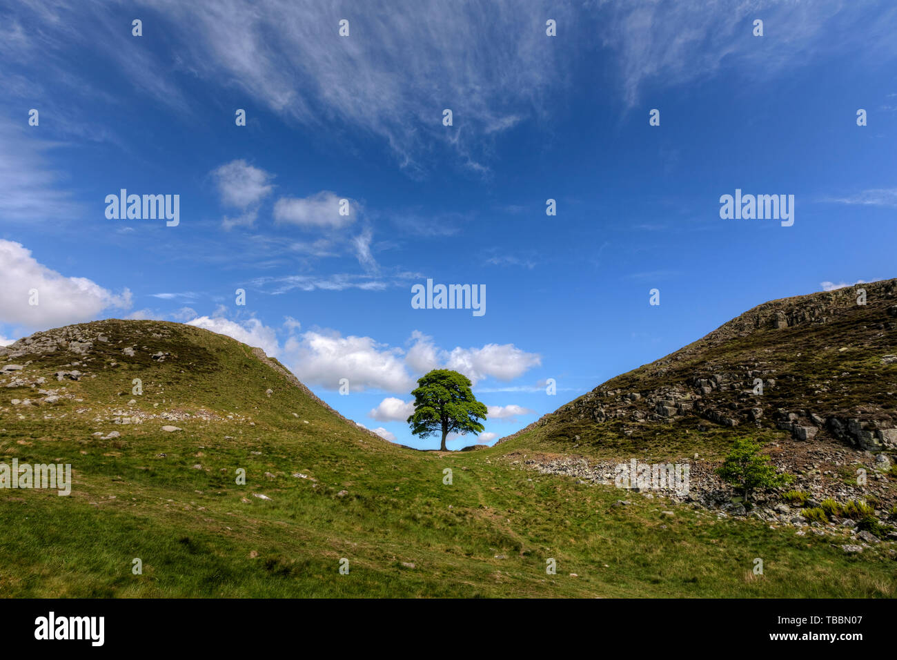 Sycamore Gap, Northumberland, England, UK, Europe Stock Photo