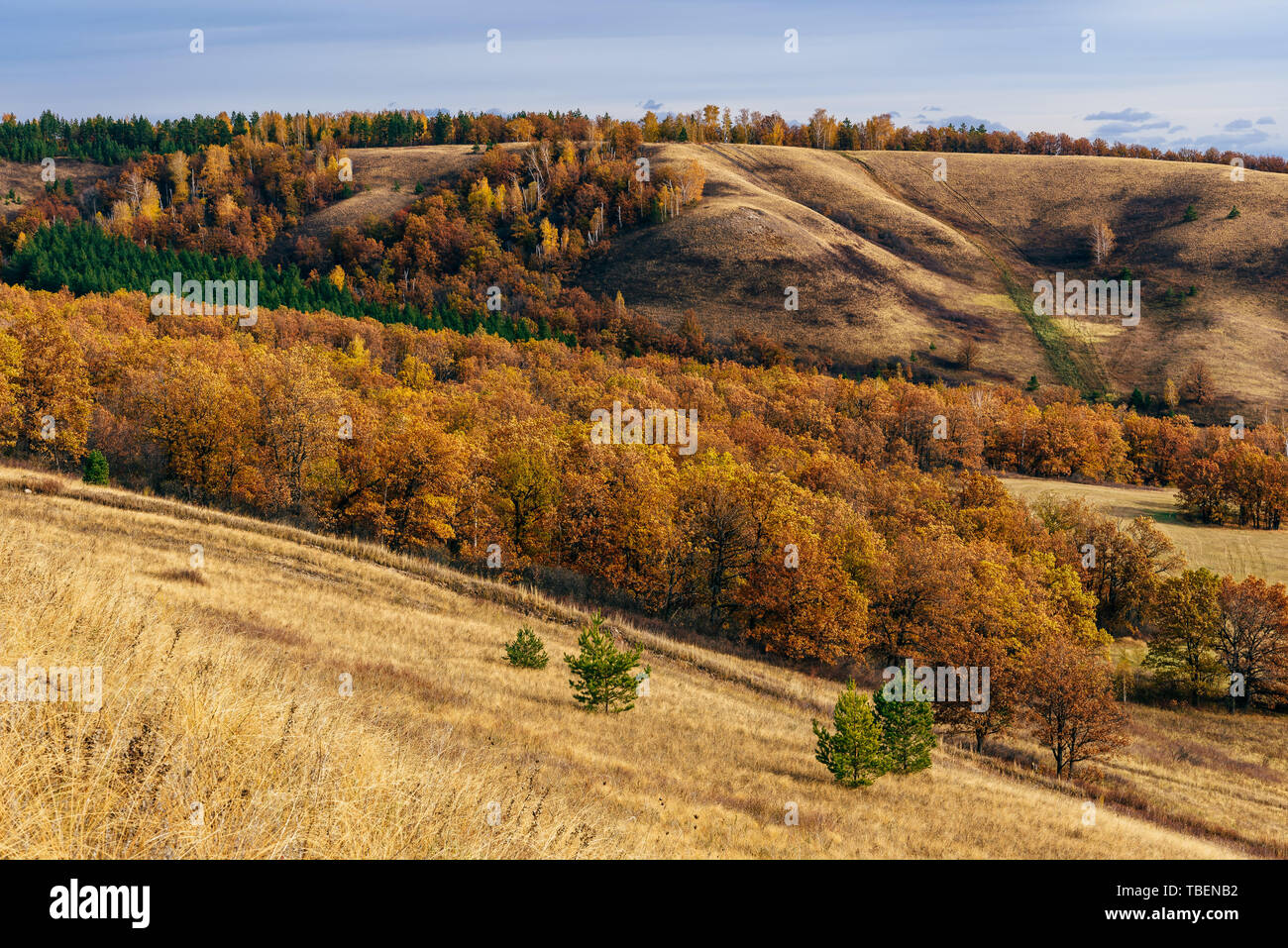 Autumnal forest on the hillside - Stock Image