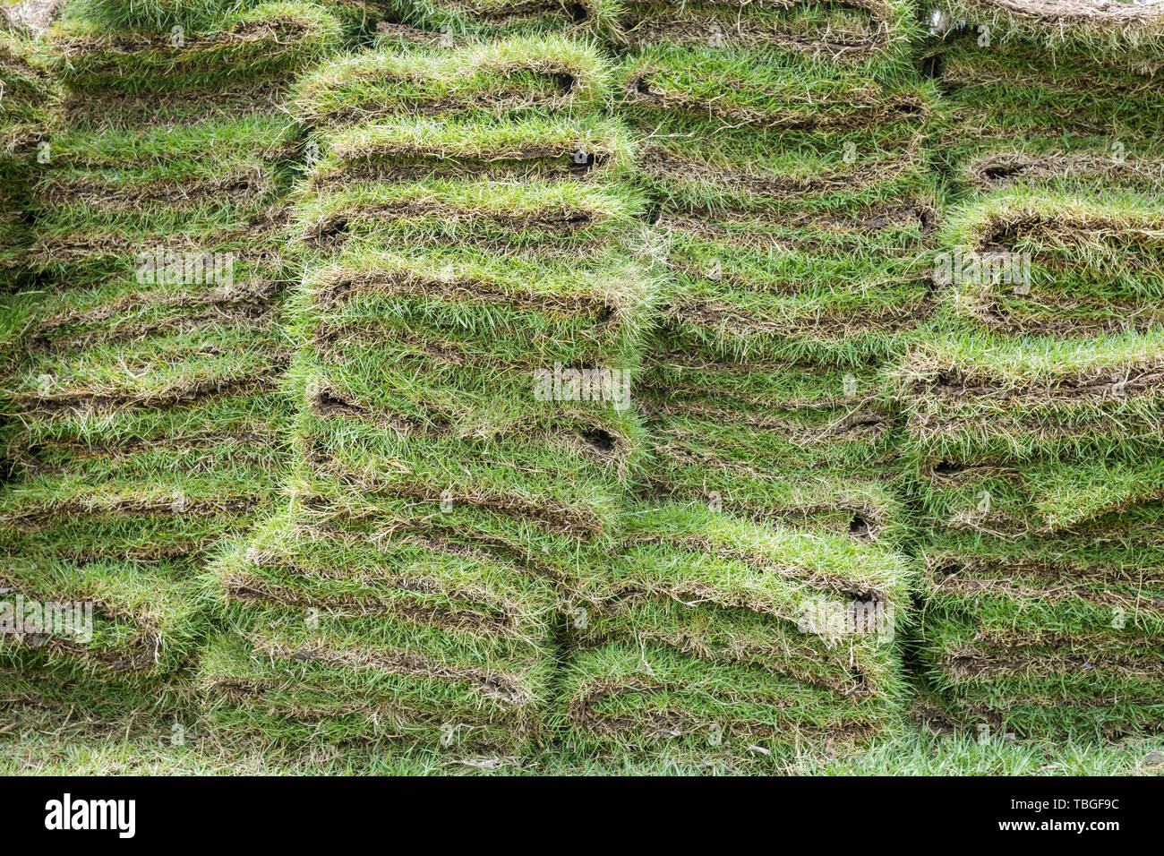 heap of natural grass turfs for garden installing - Stock Image