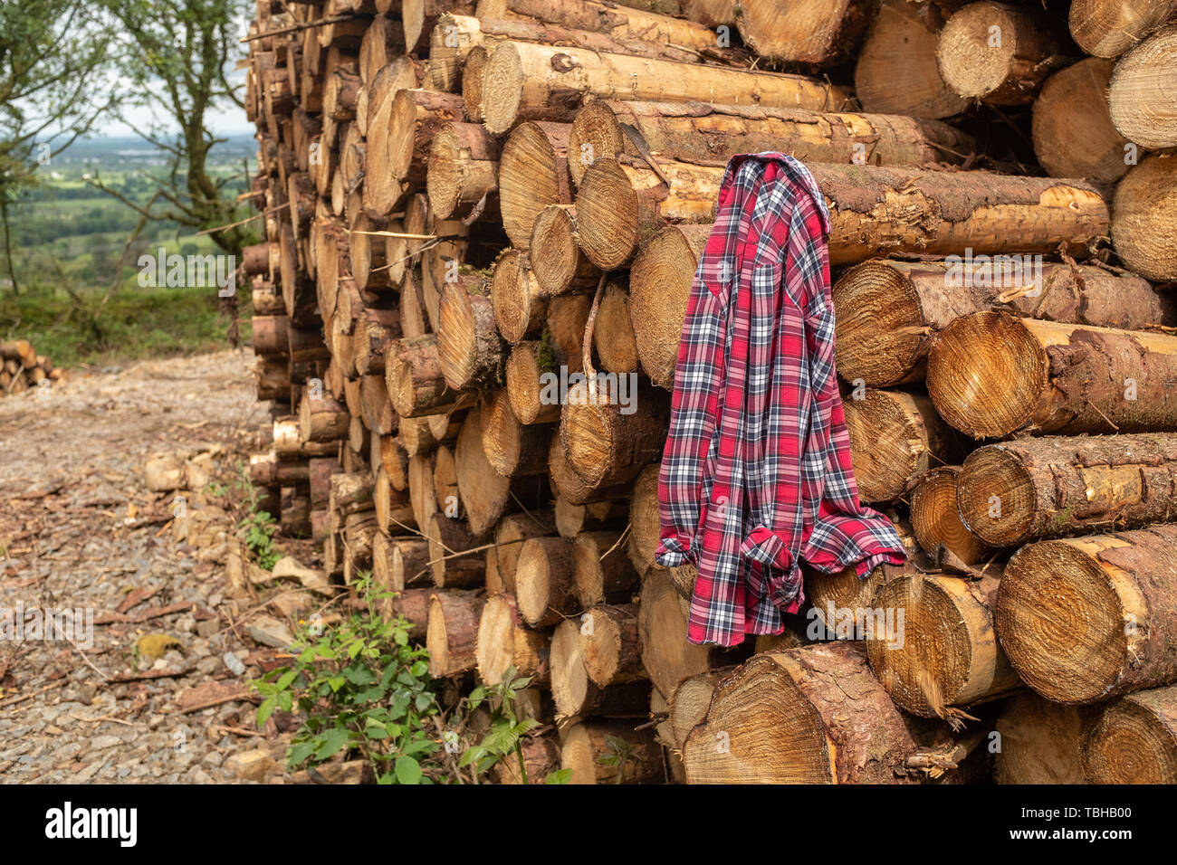 A plaid shirt hooked onto a pile of freshly cut trees striped of branches and prepared for the saw mill part of the logging industry in Ireland, nobod - Stock Image