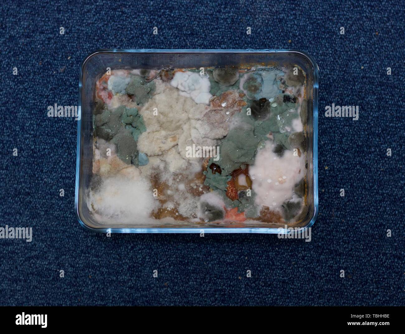 Mould grown on food in rectangular glass dish - image - Stock Image