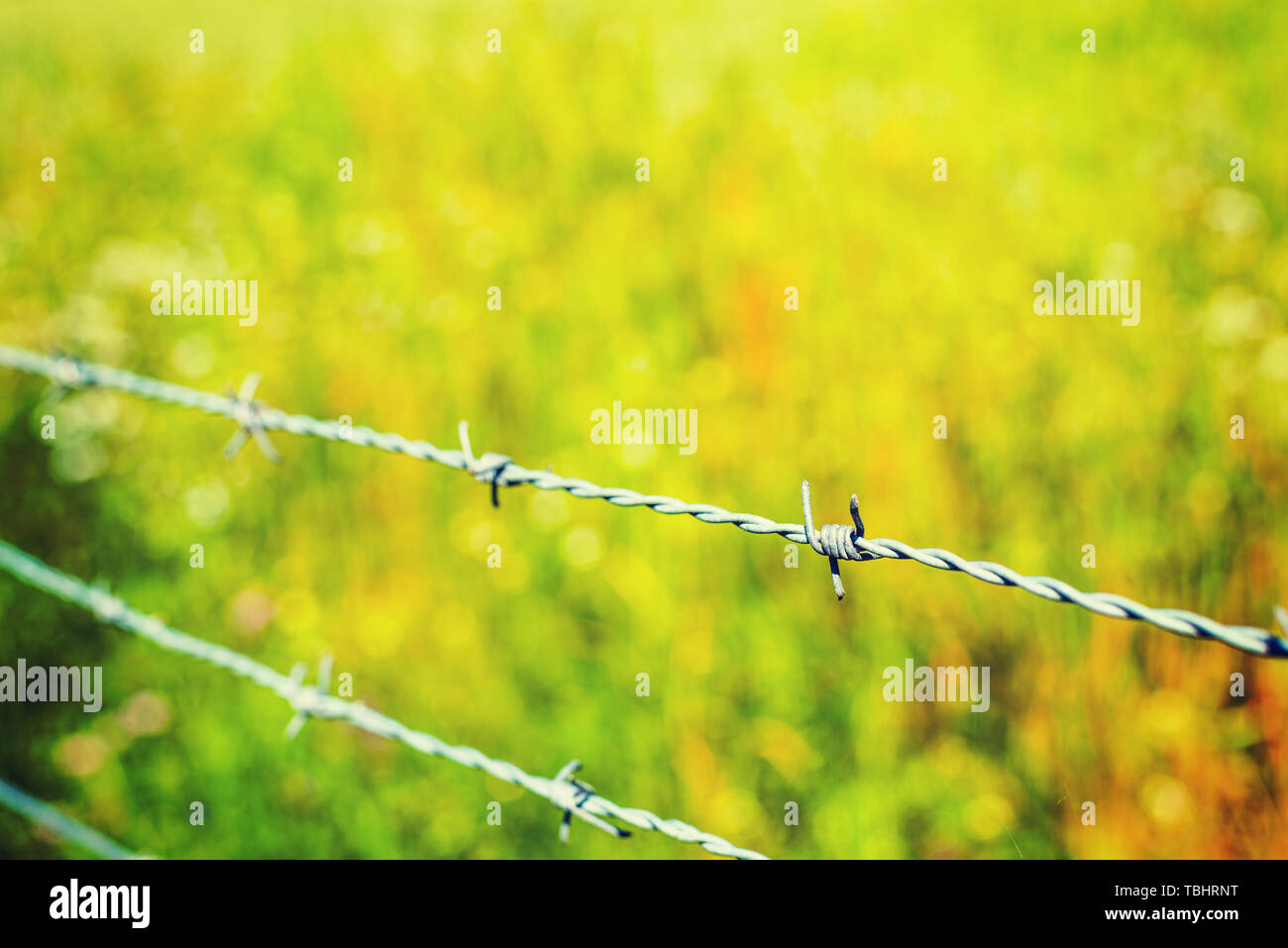Close up of a barb wire with green grass on the background - Stock Image