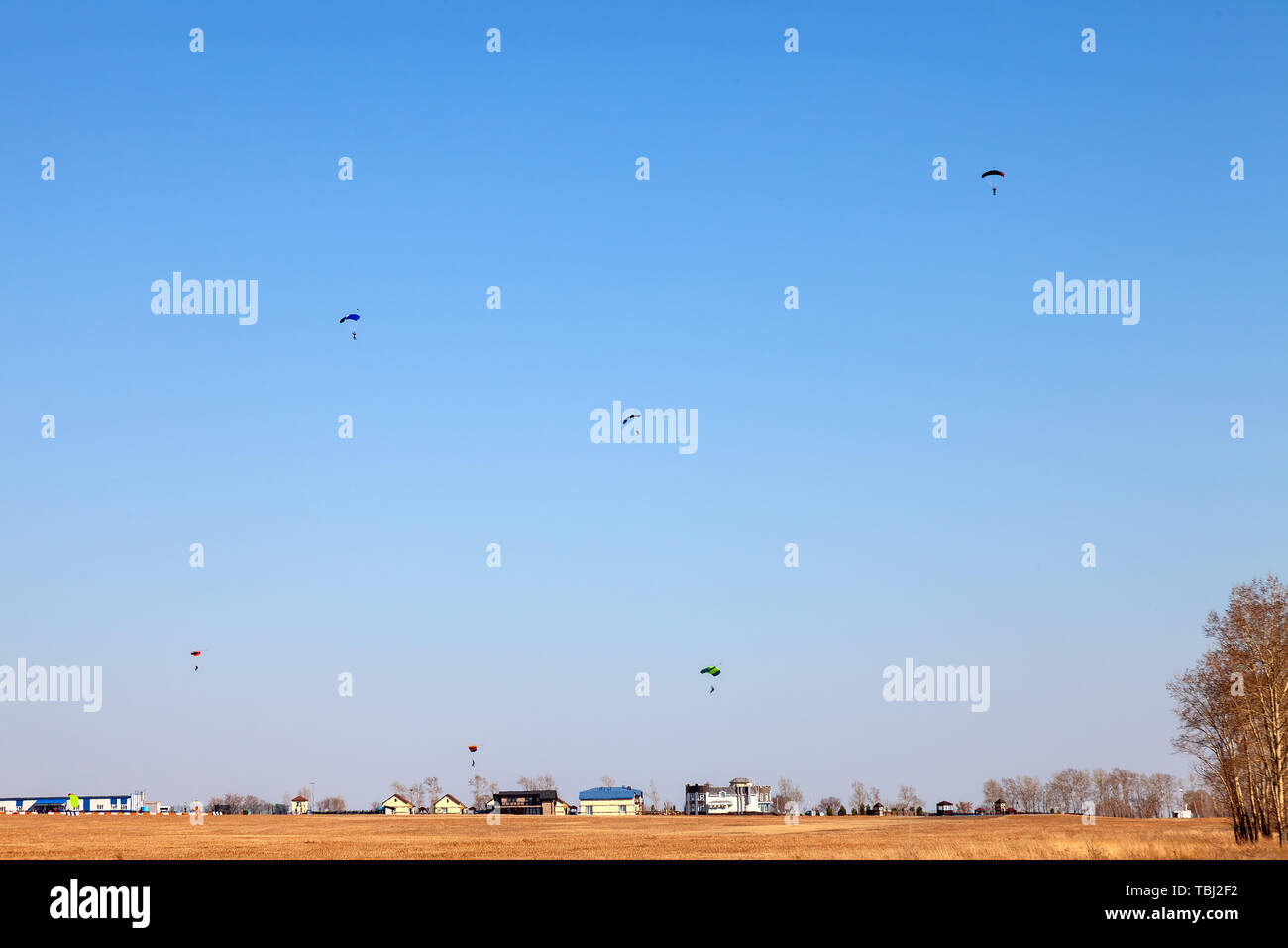 Six paratroopers paragliding landing on the yellow field during extreme sports and jumping from an airplane from a height in the blue sky over low hou Stock Photo