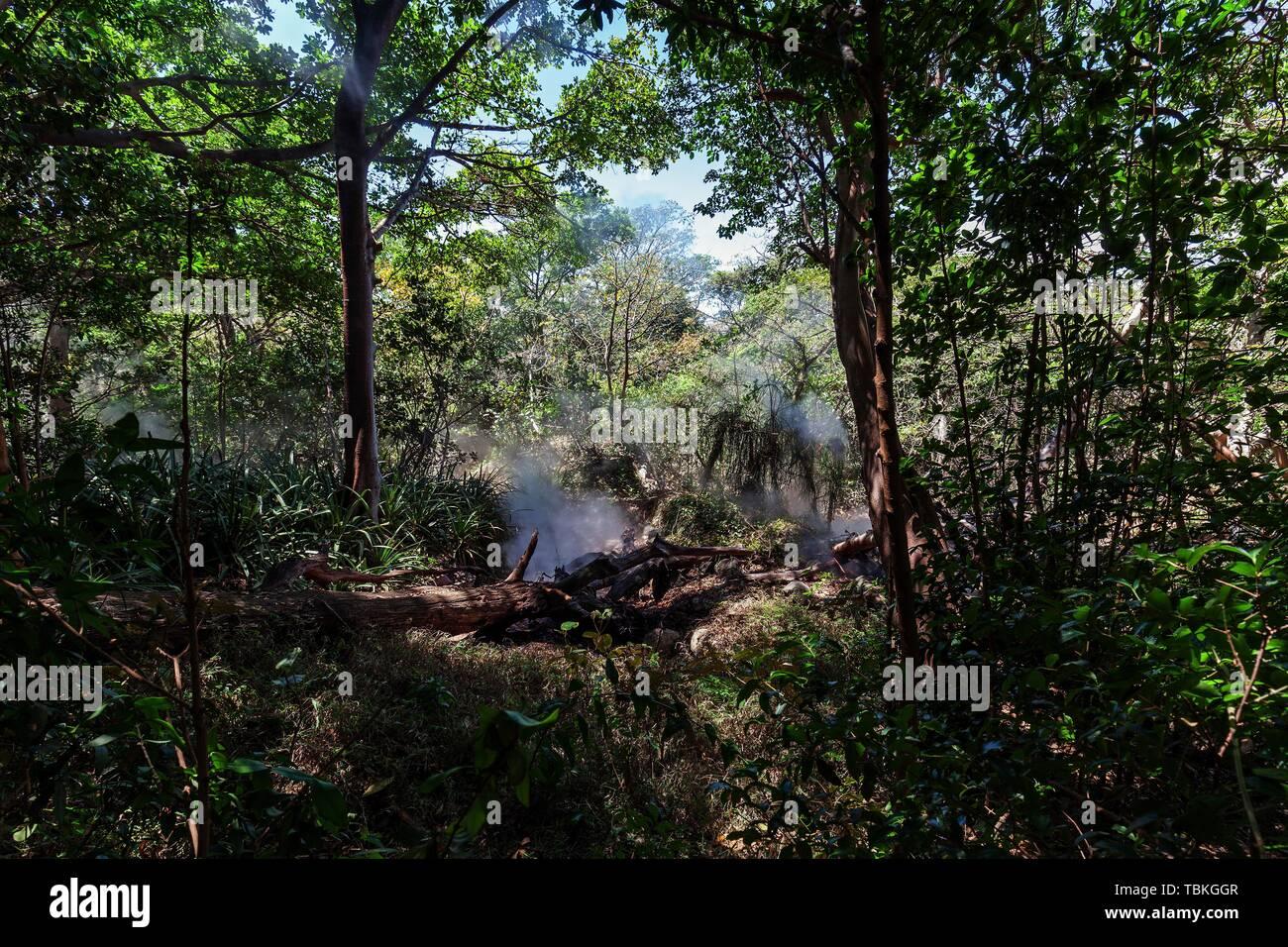Steaming Fumaroles in the Rainforest of the National Park Rincon de la Vieja, Parque Nacional Rincon de la Vieja, Province Guanacaste, Costa Rica - Stock Image