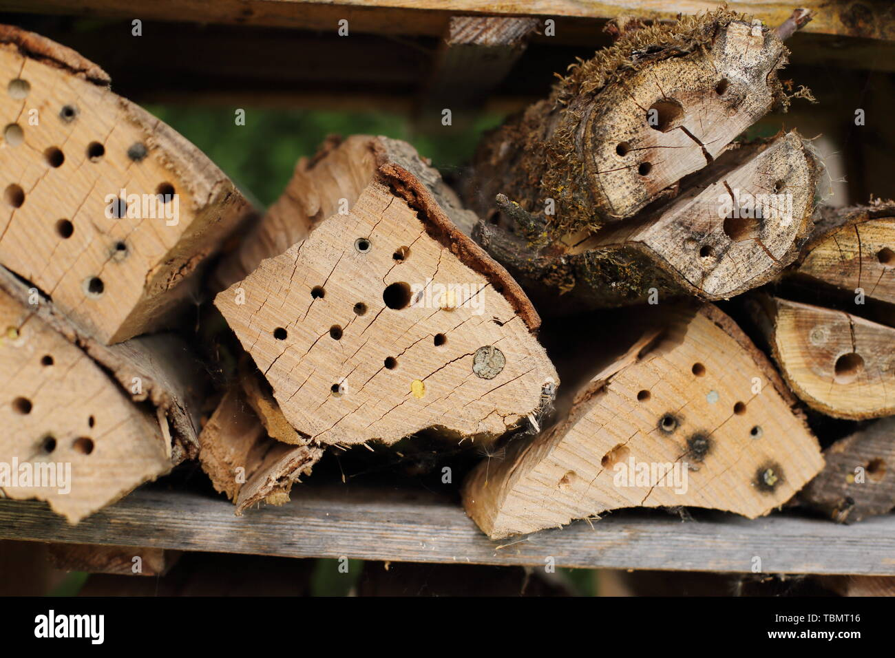 Different nests of Wild bees in a insect hotel - Stock Image