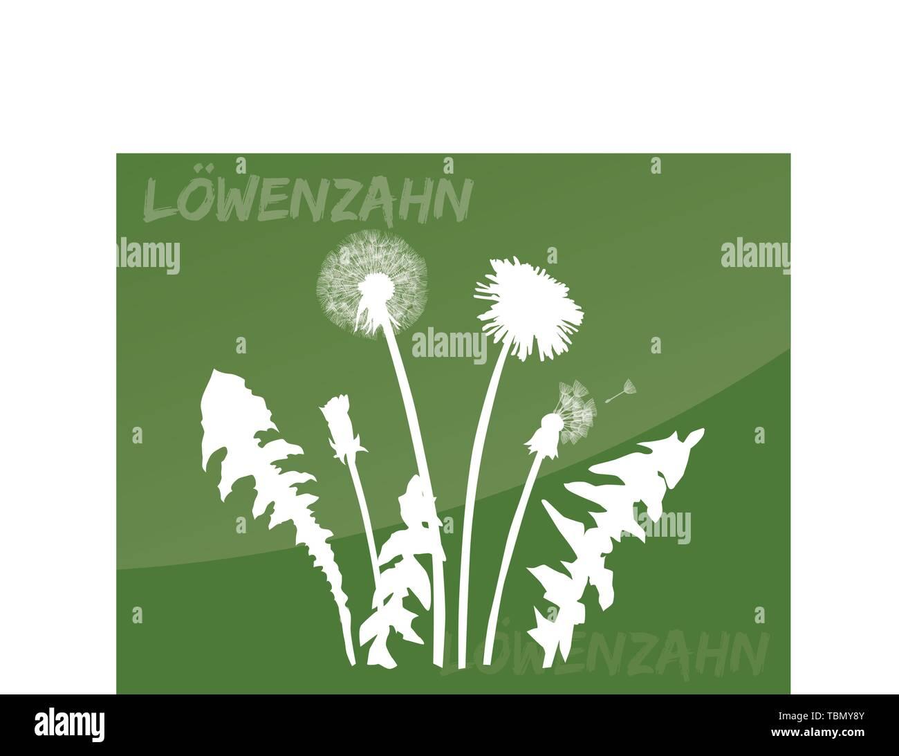 dandelion flower meadows wildflower blooming yellow spring - Stock Vector