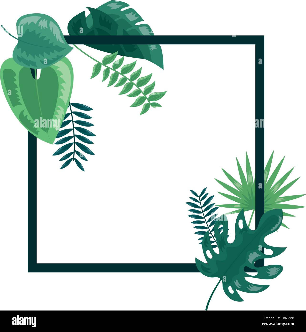 Tropical Leaves Foliage Frame Decoration Stock Vector Image Art Alamy The design also has a white frame and lots of space to add images or text. https www alamy com tropical leaves foliage frame decoration image248186055 html