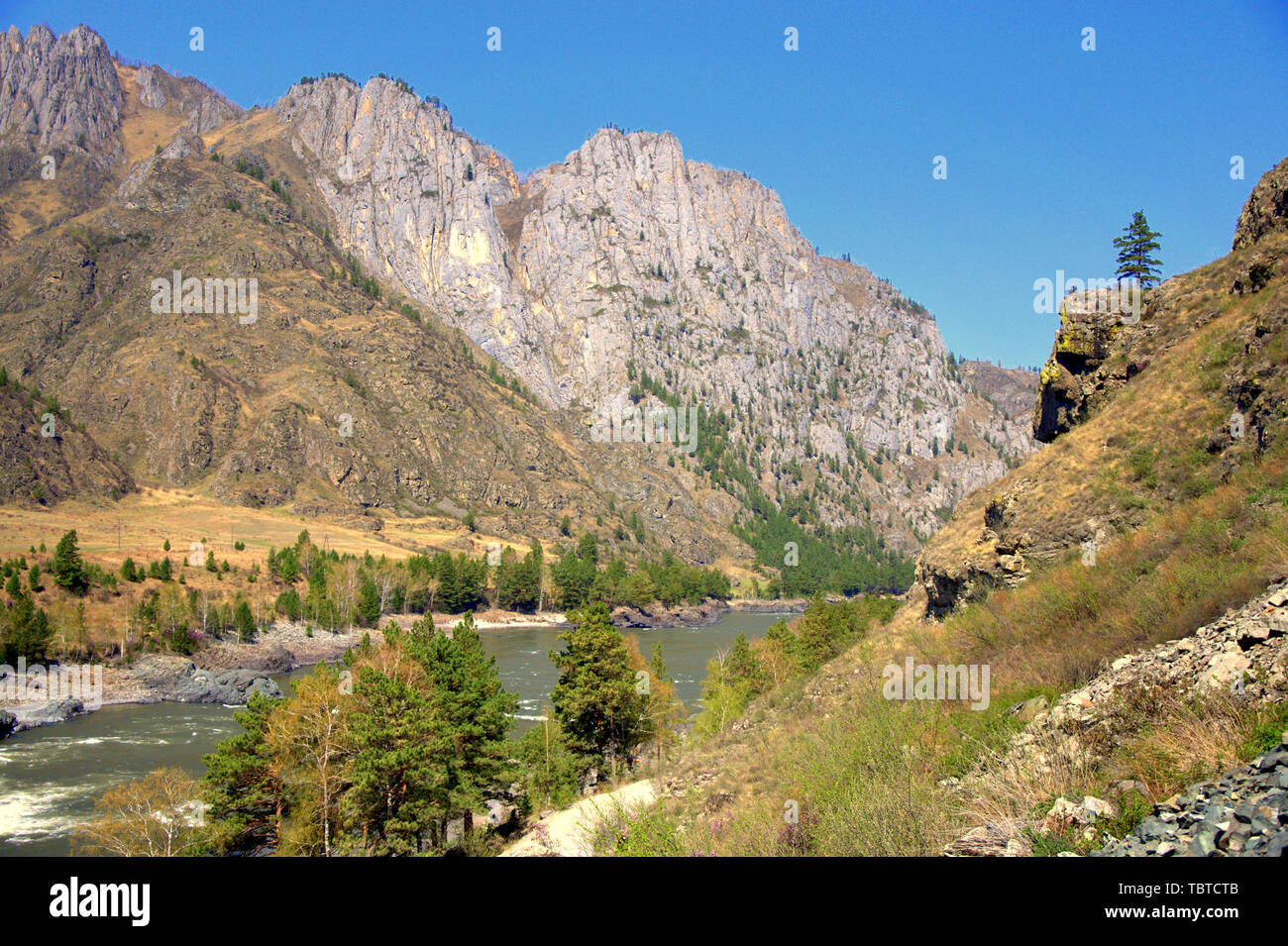The swift Katun River carries its turquoise waters along the foot of the Altai Mountains. Gorny Altai, Siberia, Russia. - Stock Image