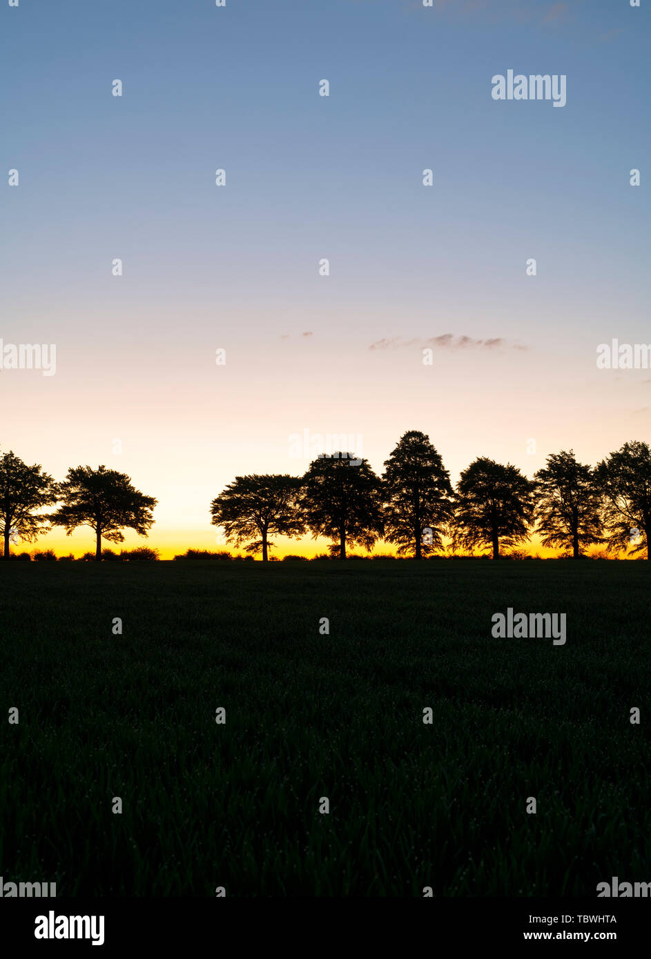 Line of silhouette trees at sunrise in the wiltshire countryside. Wiltshire, England Stock Photo