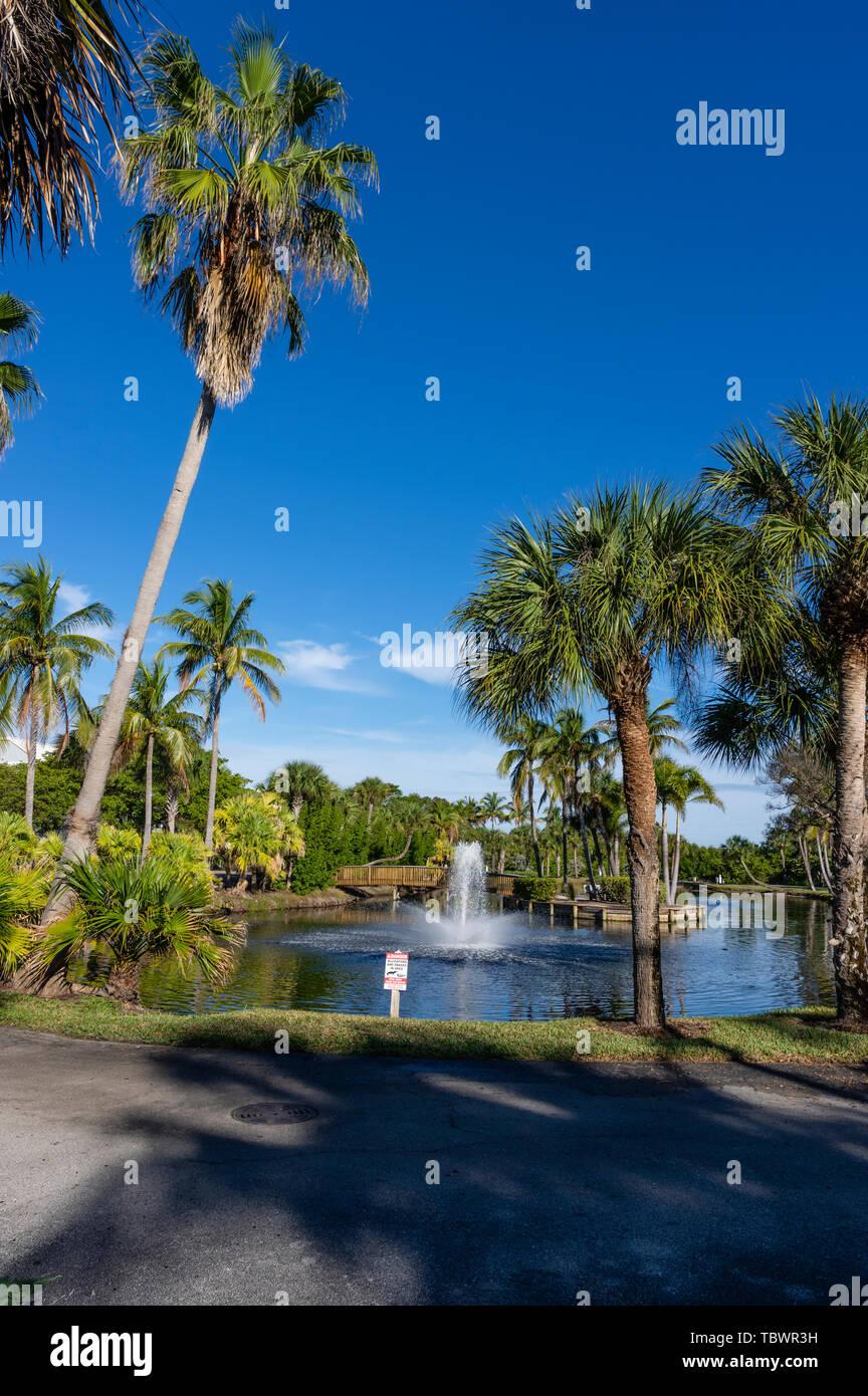 Coconut Palm tree inside the South Seas Island Resort. Captiva Island, Florida Stock Photo