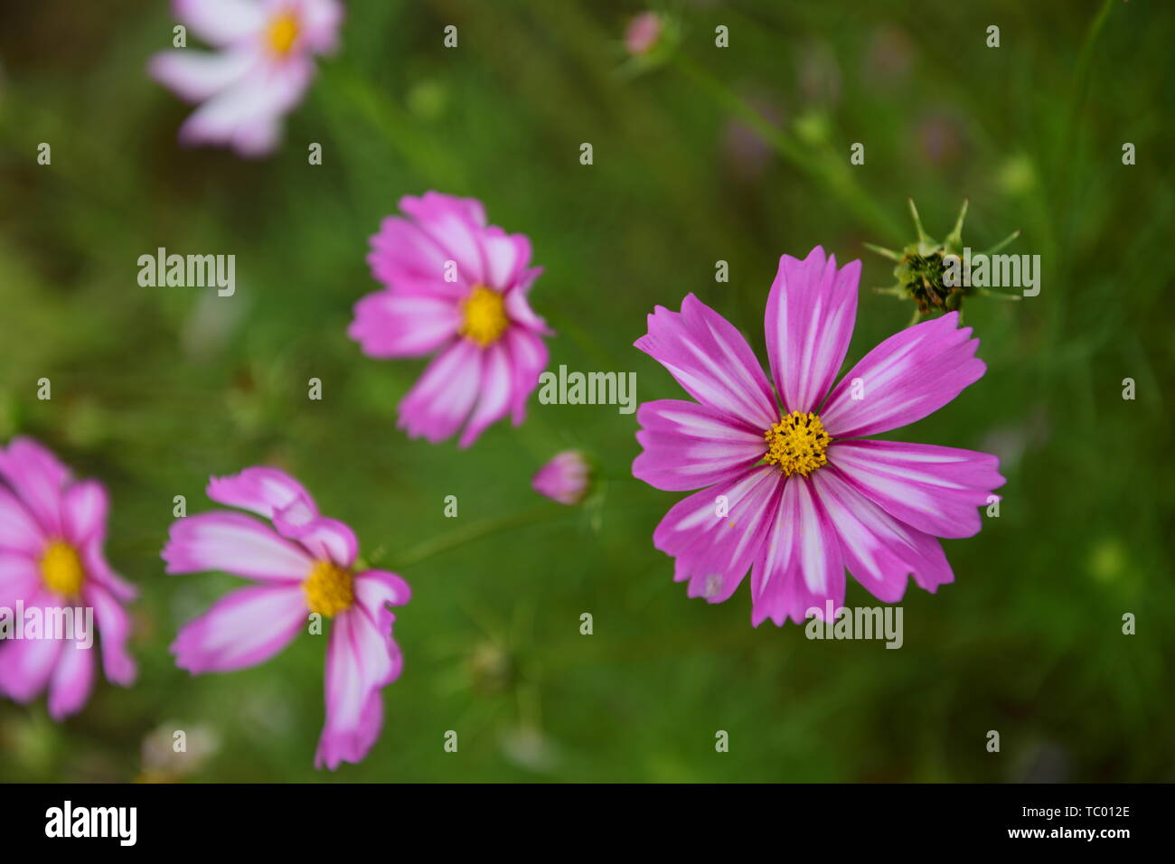 Gesang Flowers High Definition Close Up High Resolution Stock Photography And Images Alamy