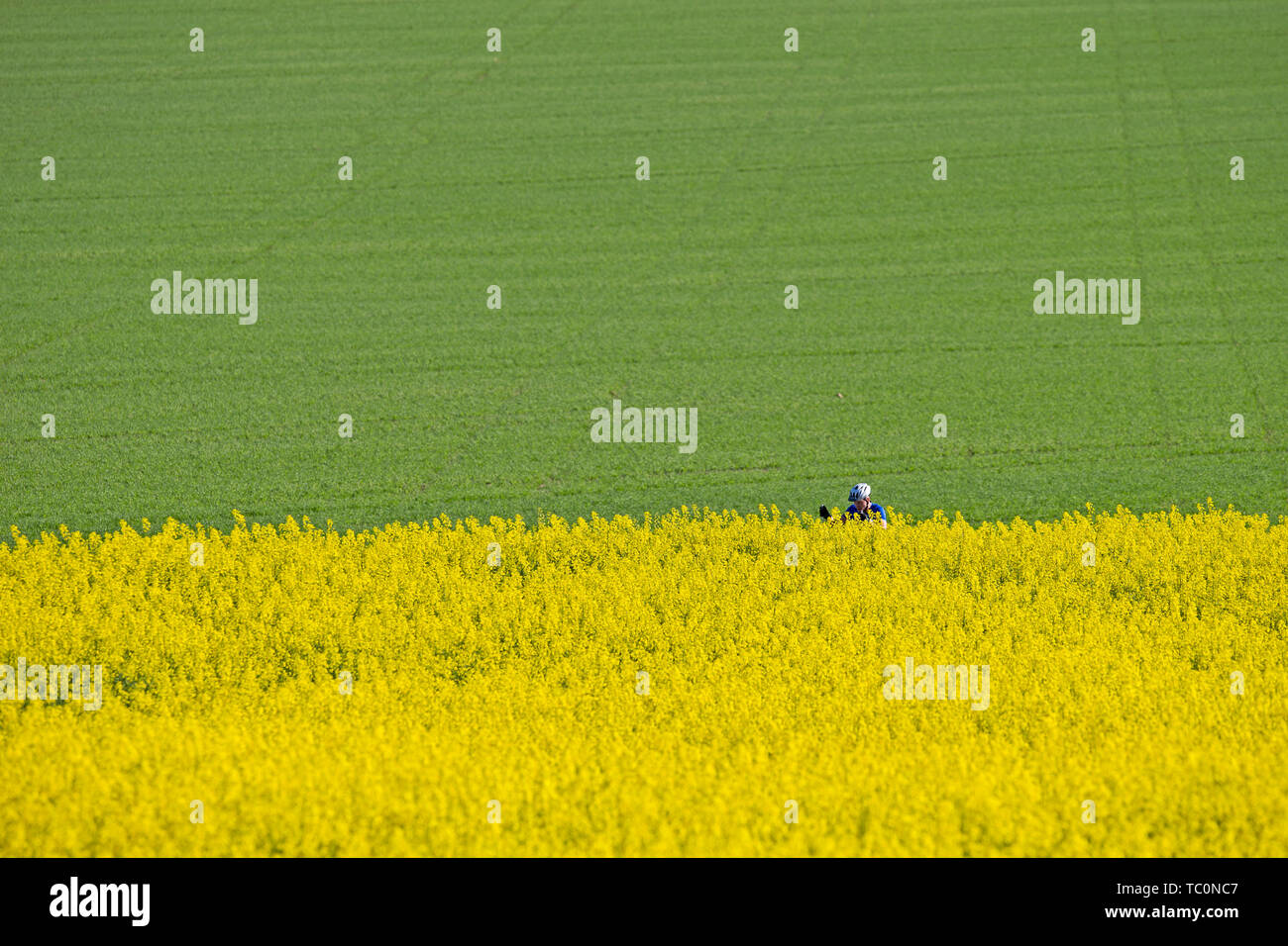 Gult Stock Photos Gult Stock Images Alamy
