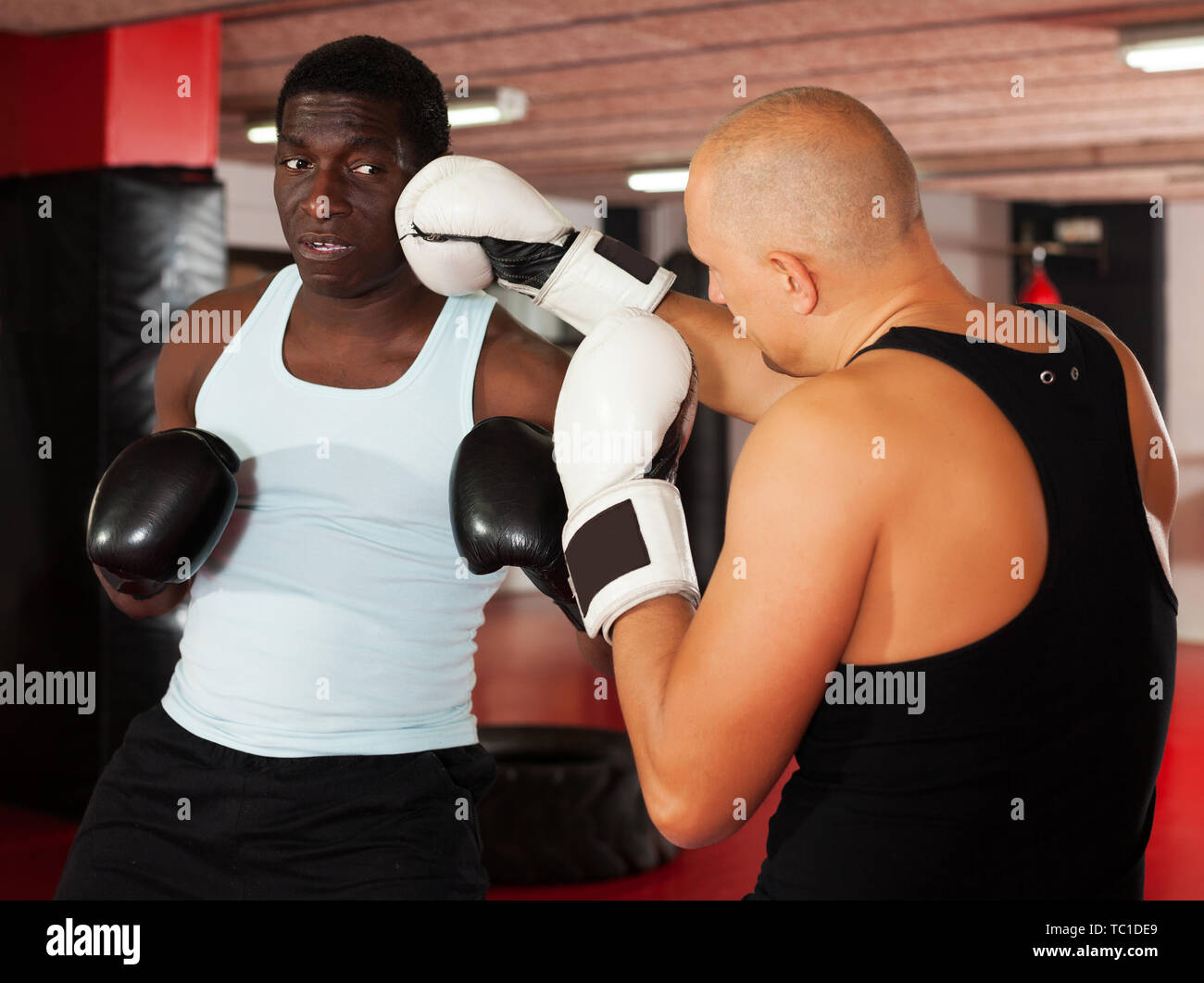 Sparring two serious boxers in the gym. Battle of two boxers - Stock Image