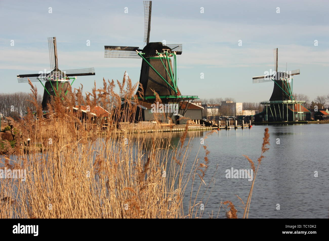 old Dutch windmills made of wood built along the water stream of the Zaan river at sunset time with its warm heat and ears of corn. - Stock Image