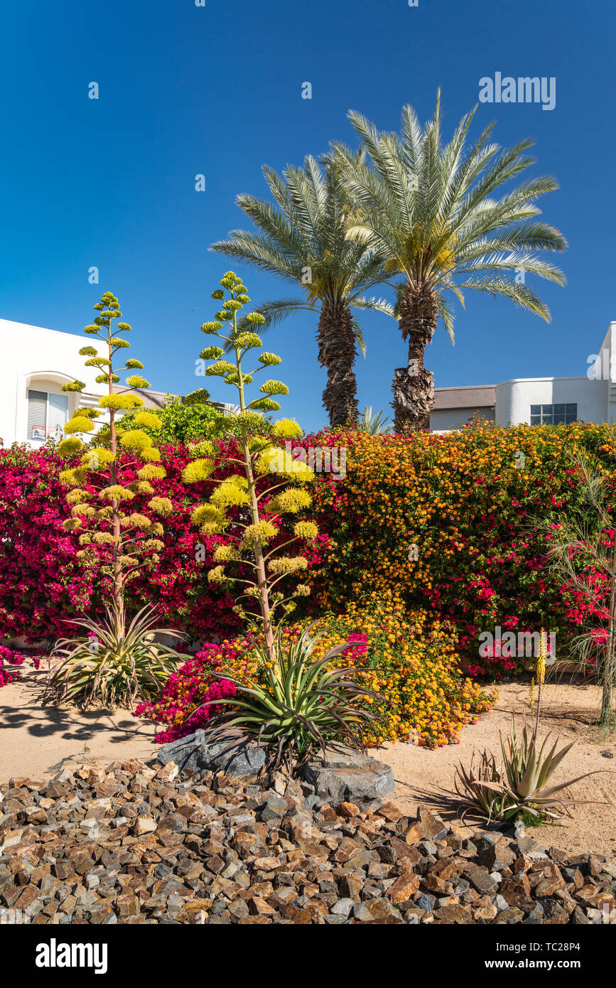 Residential Landscaping On Ramon Road Palm Springs California
