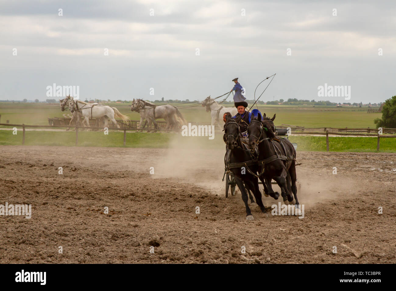 Kalocsa, Puszta, Hungary - May 23, 2019 :  Csikos Hungarian equestrains performing stunts in corral. Stock Photo