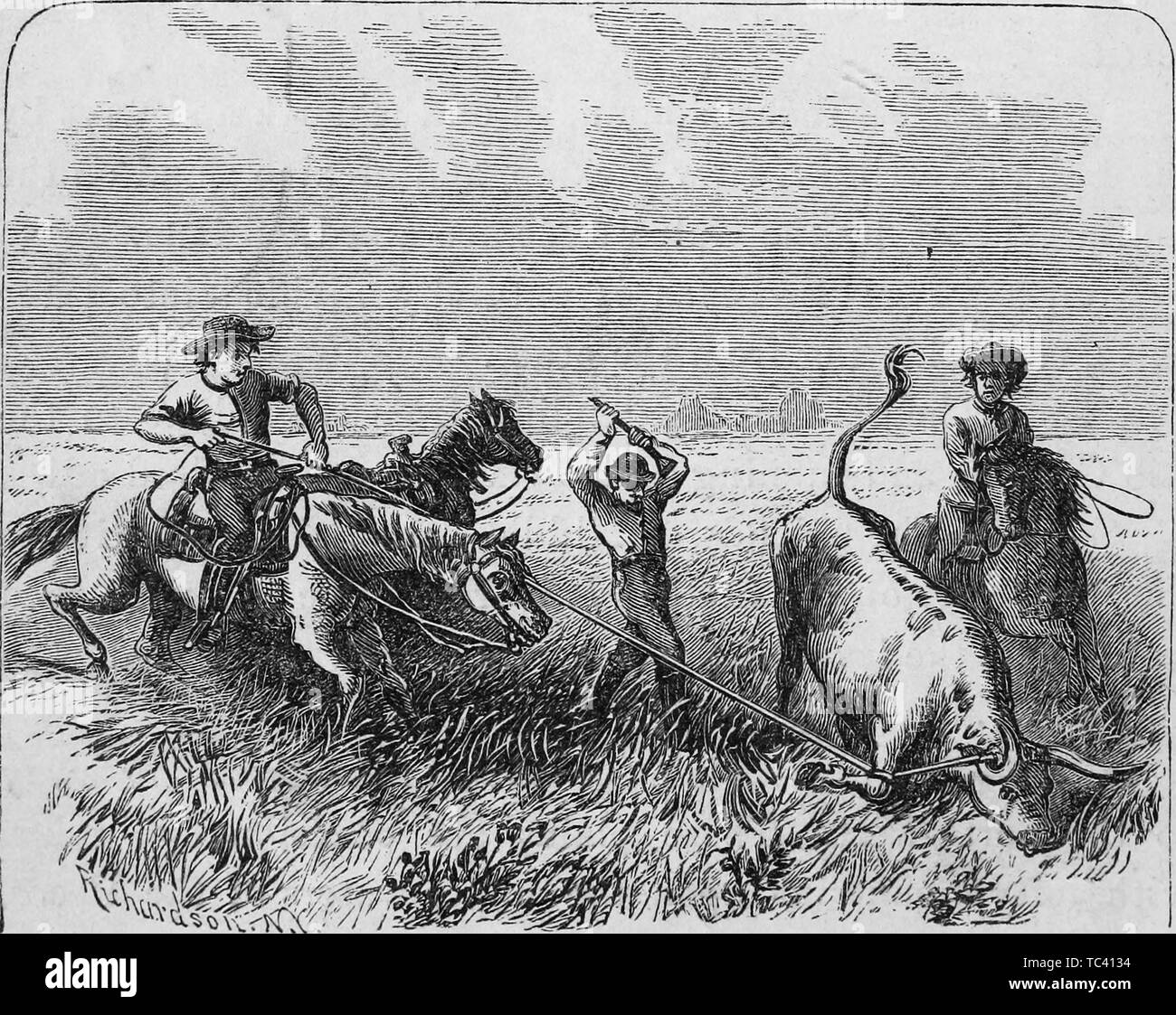 Engraving of cowboys branding a cattle, from the book 'Brief history of Texas from its earliest settlement to which is appended the constitution of the state' by De Witt Clinton Baker, 1873. Courtesy Internet Archive. () Stock Photo