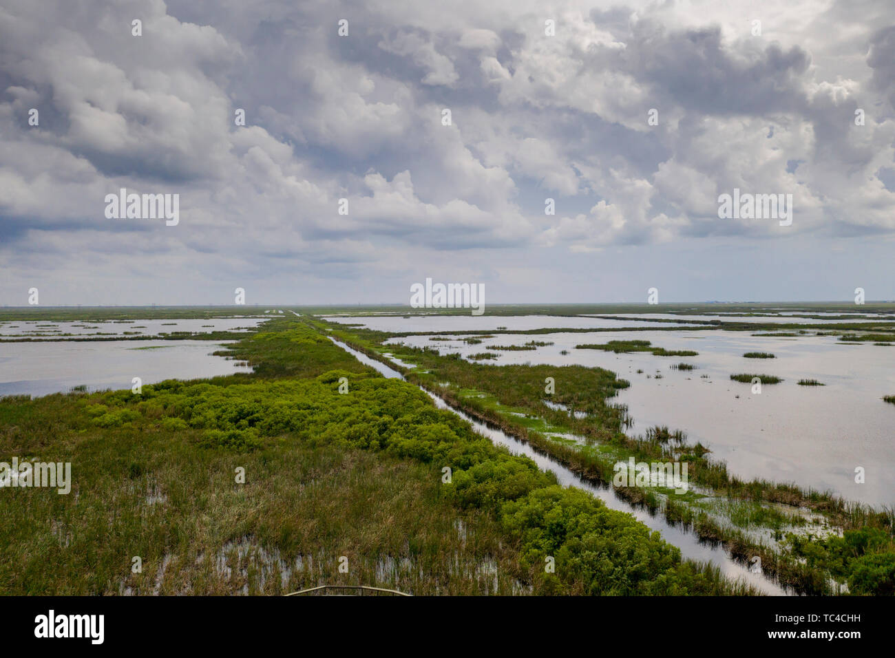 Belle Glade, Florida - An artificial wetlands, one of six stormwater treatment areas constructed in south Florida to reduce the amount of phosphorus e - Stock Image