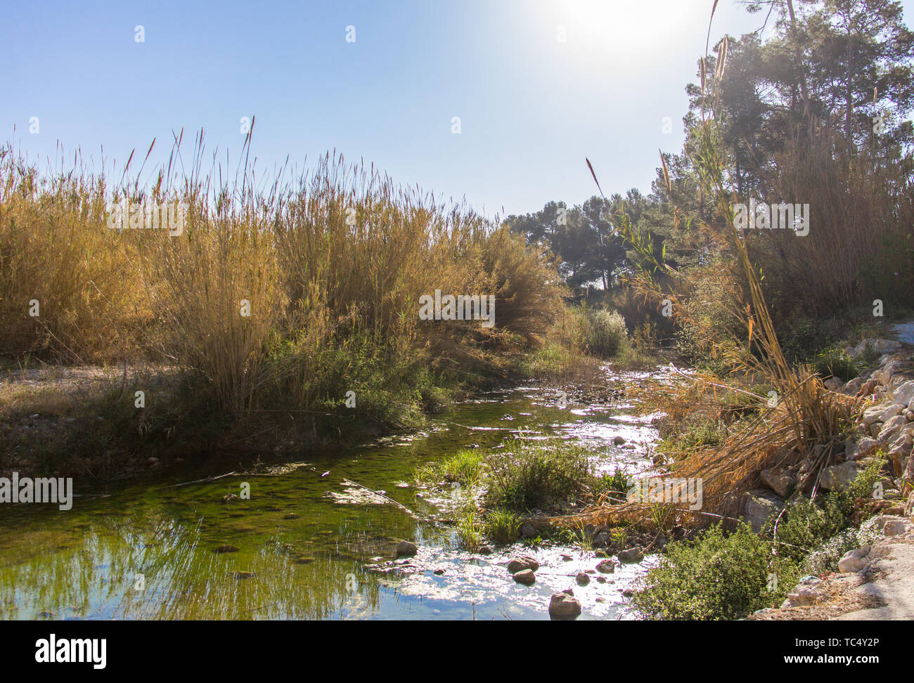 Stagnant water in a river in Alcalalí, Spain - Stock Image