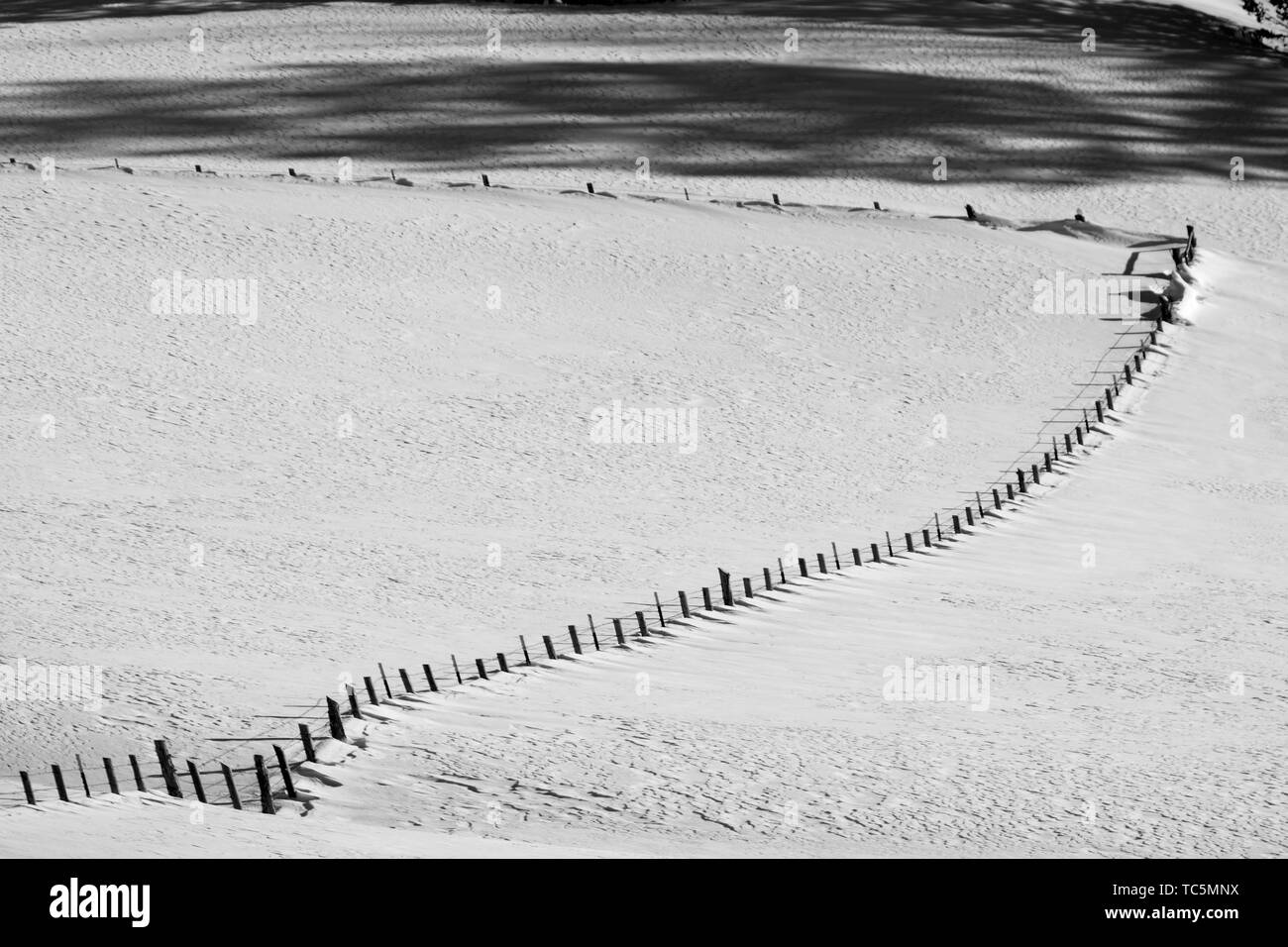 Fresh snow blankets Bryce Canyon National Park, Utah. - Stock Image