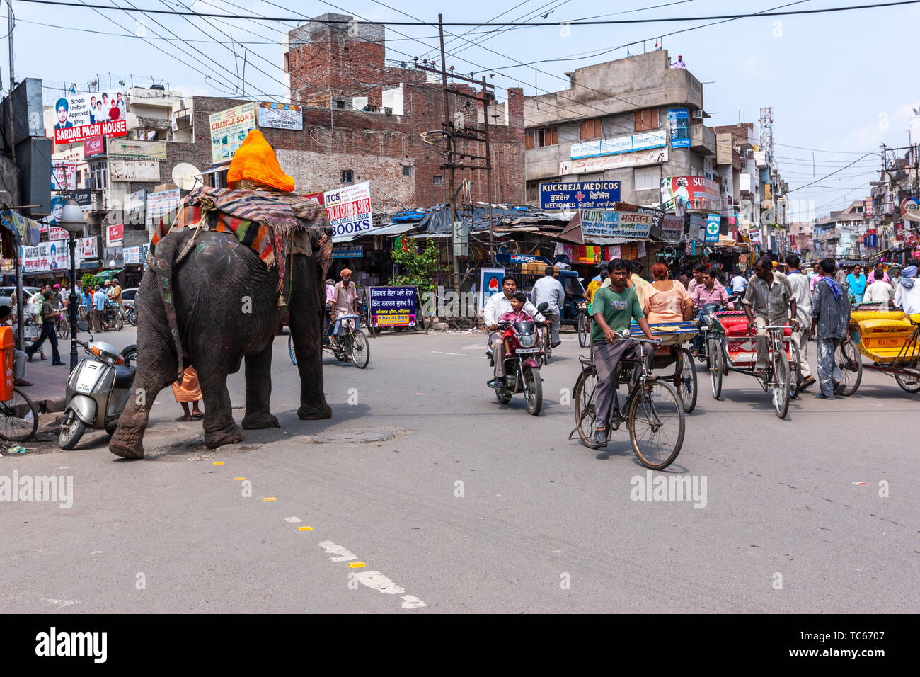 Elephant crossing a busy road in Amritsar, Punjab, India Stock Photo
