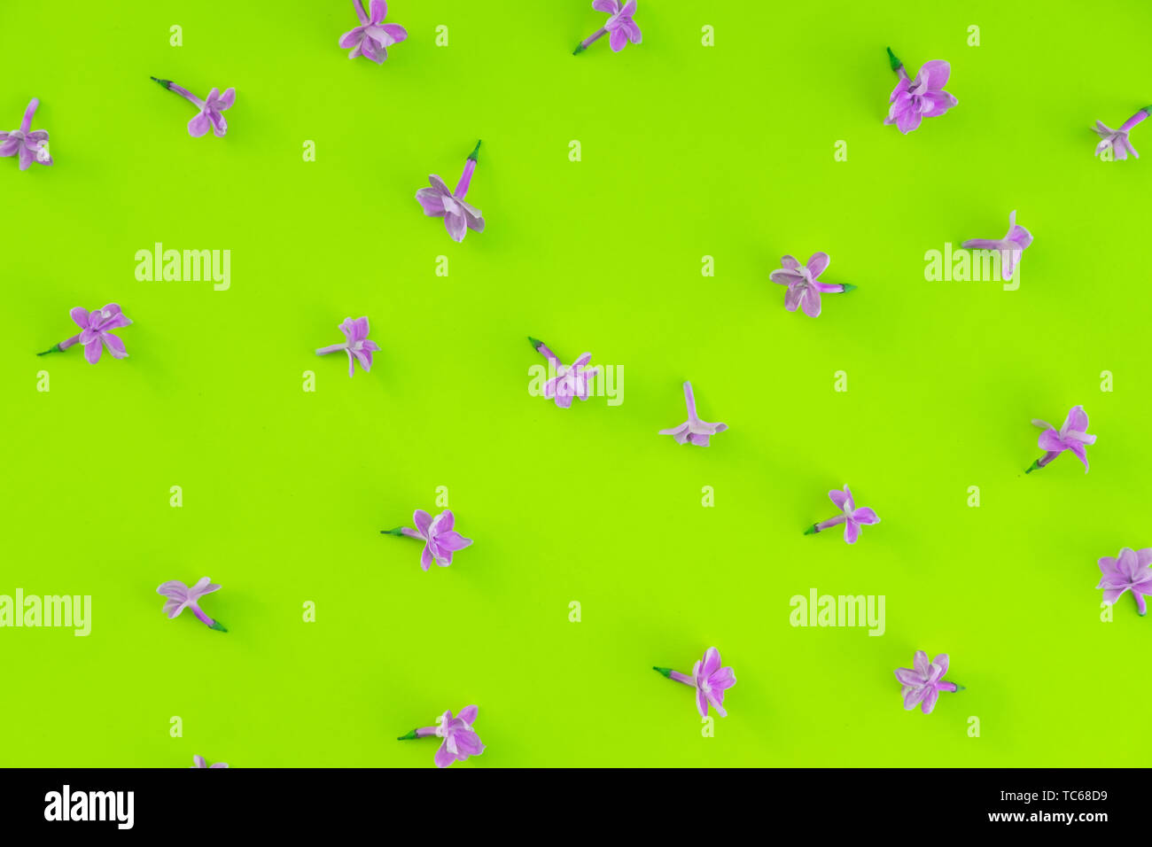 Lilac Flowers Isolated Flat Lay Backdrop Floral Decoration On