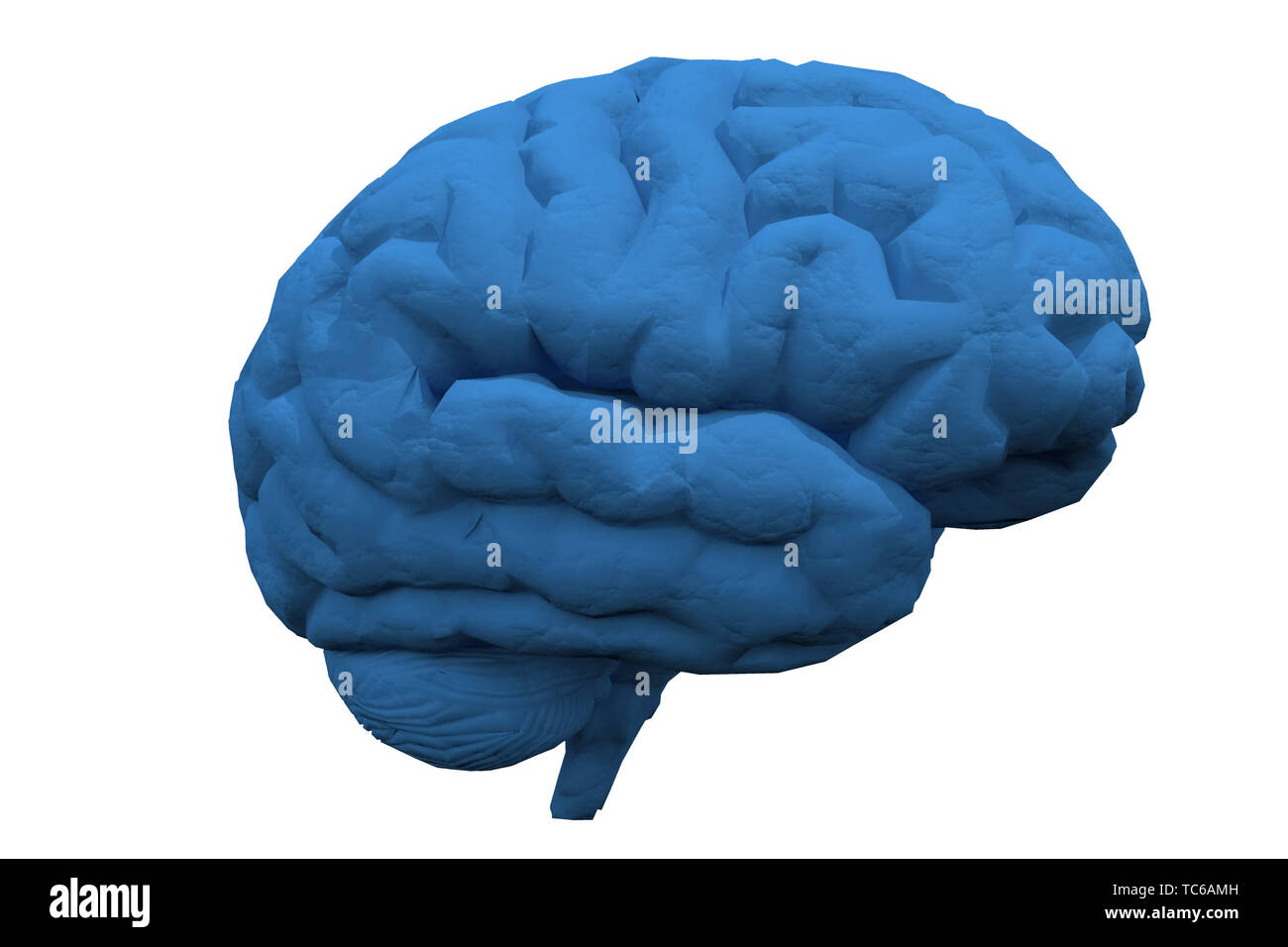 Human brain. 3D rendered model - Stock Image