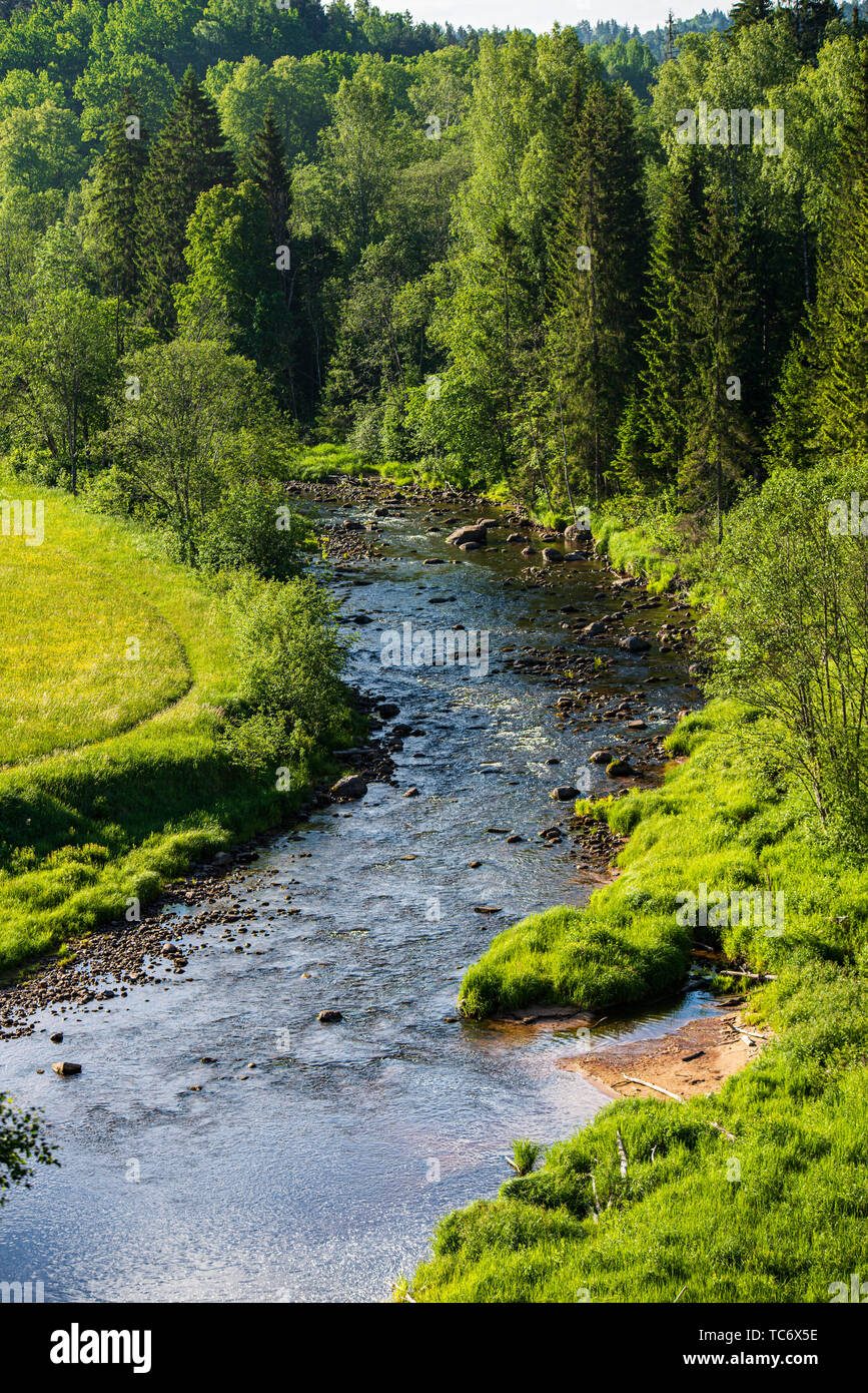 Beautiful Forest River In Latvia In Summer Calm Water And