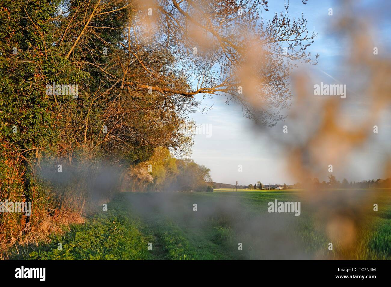 blackthorn branch (Prunus spinosa) in front of a rural path bordered by hedges, Eure-et-Loir department, Centre-Val de Loire region, France, Europe. - Stock Image
