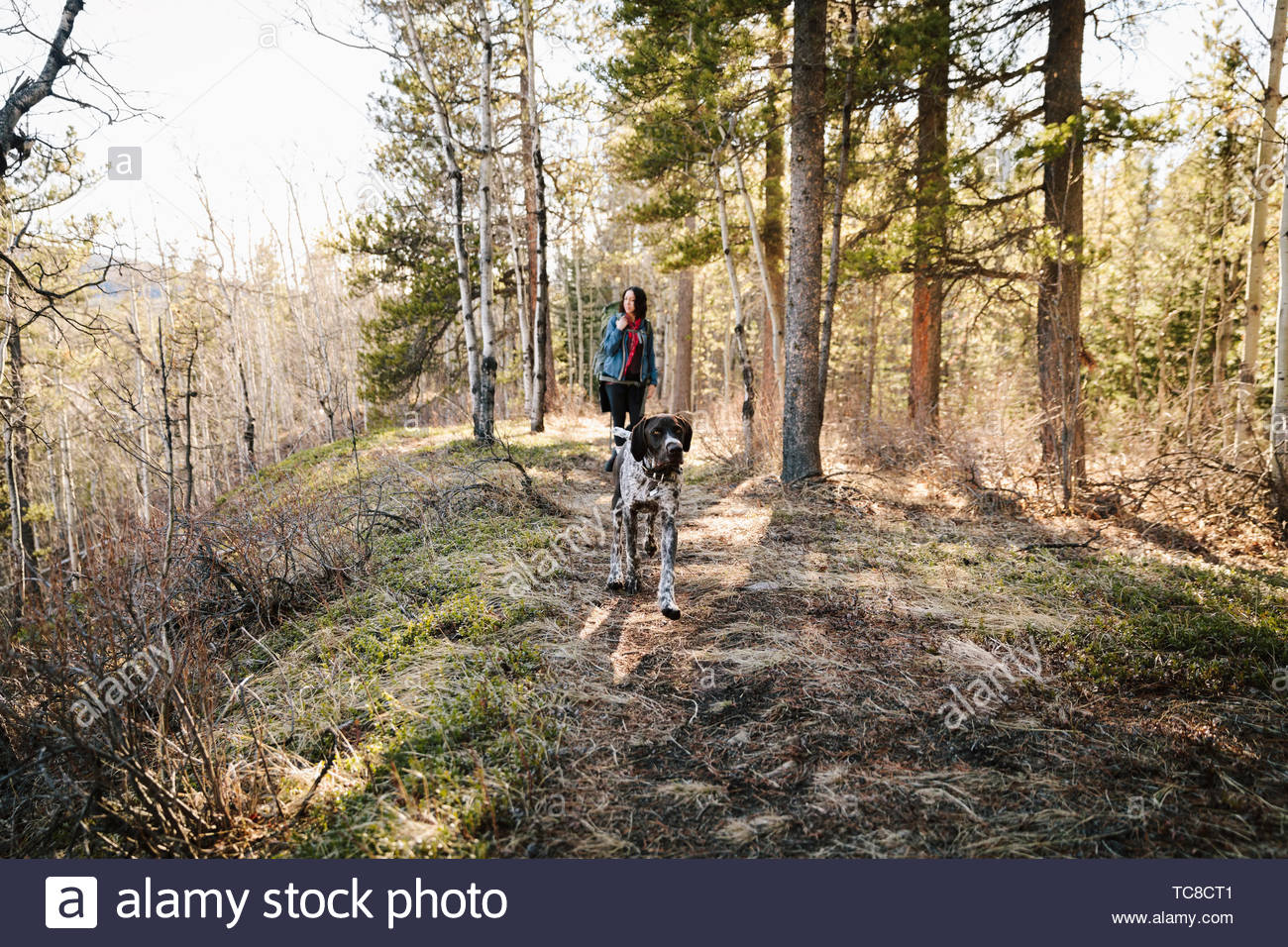 Woman with dog hiking in sunny woods - Stock Image