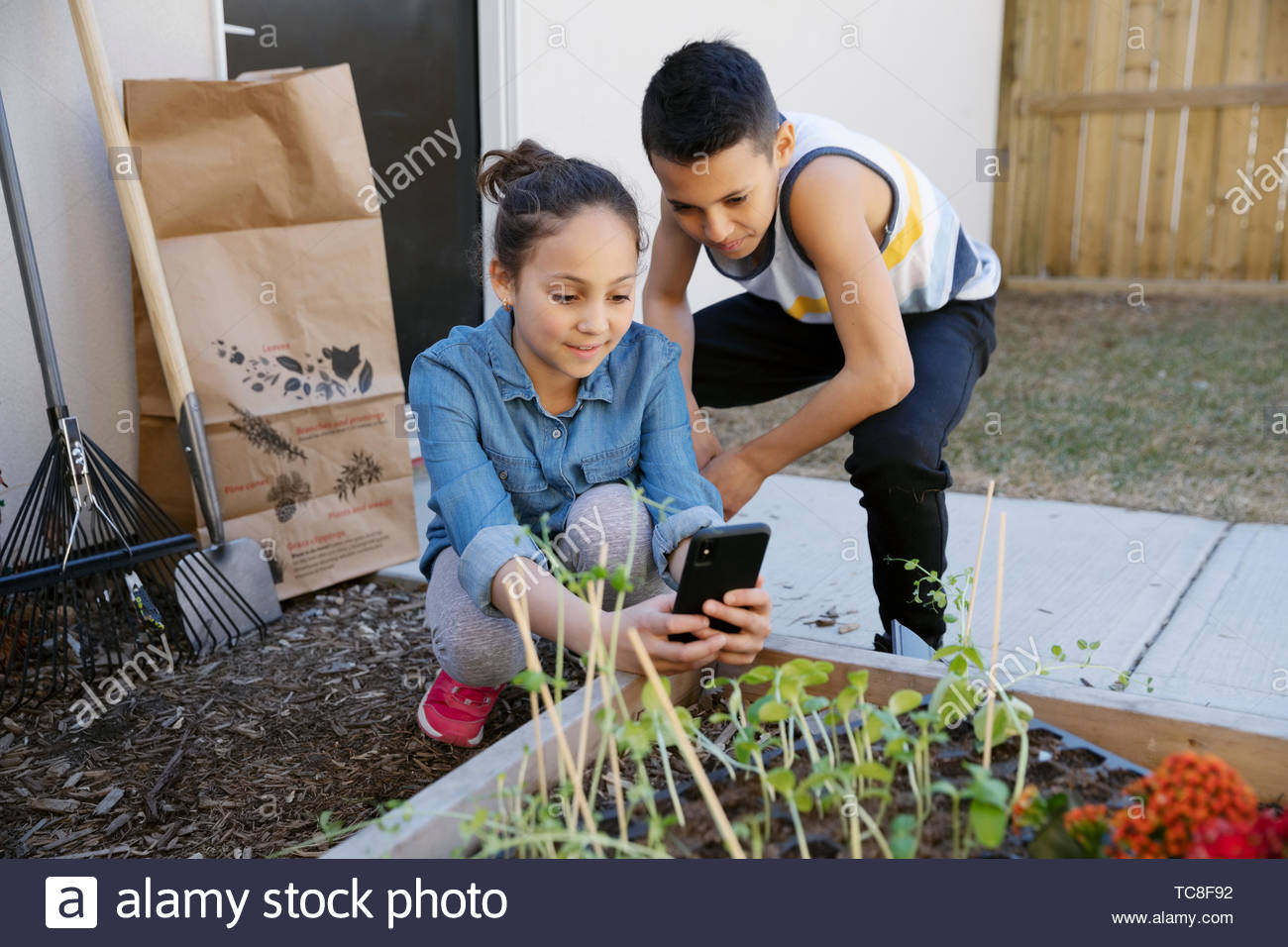 Brother and sister with camera phone photographing seedlings in garden - Stock Image