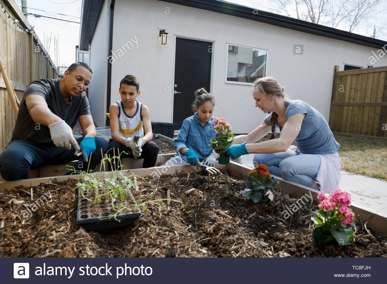 Family planting flowers in sunny garden - Stock Image