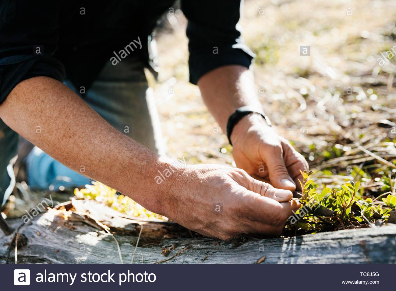 Close up man gardening - Stock Image