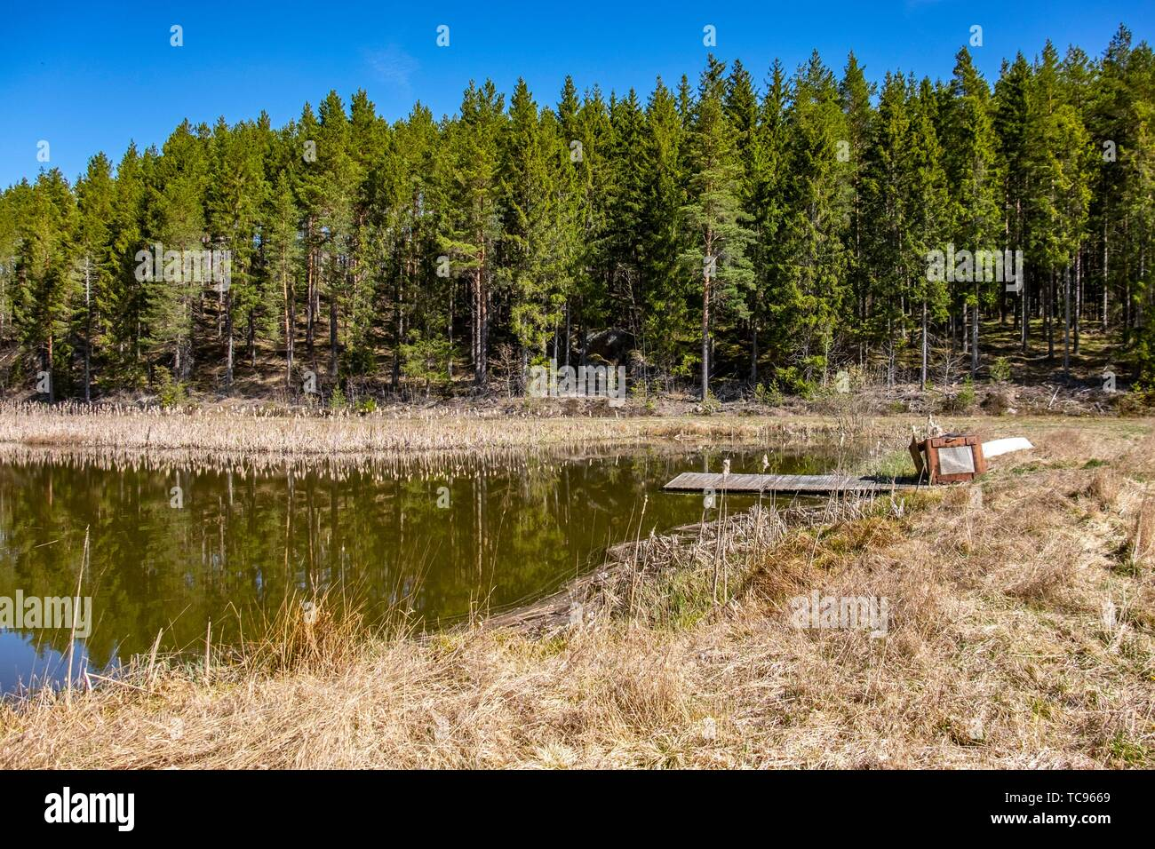 Lake and forests of Sweden. - Stock Image