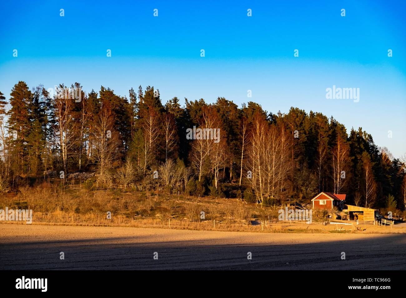 Cabin in the woods in Sweden. - Stock Image