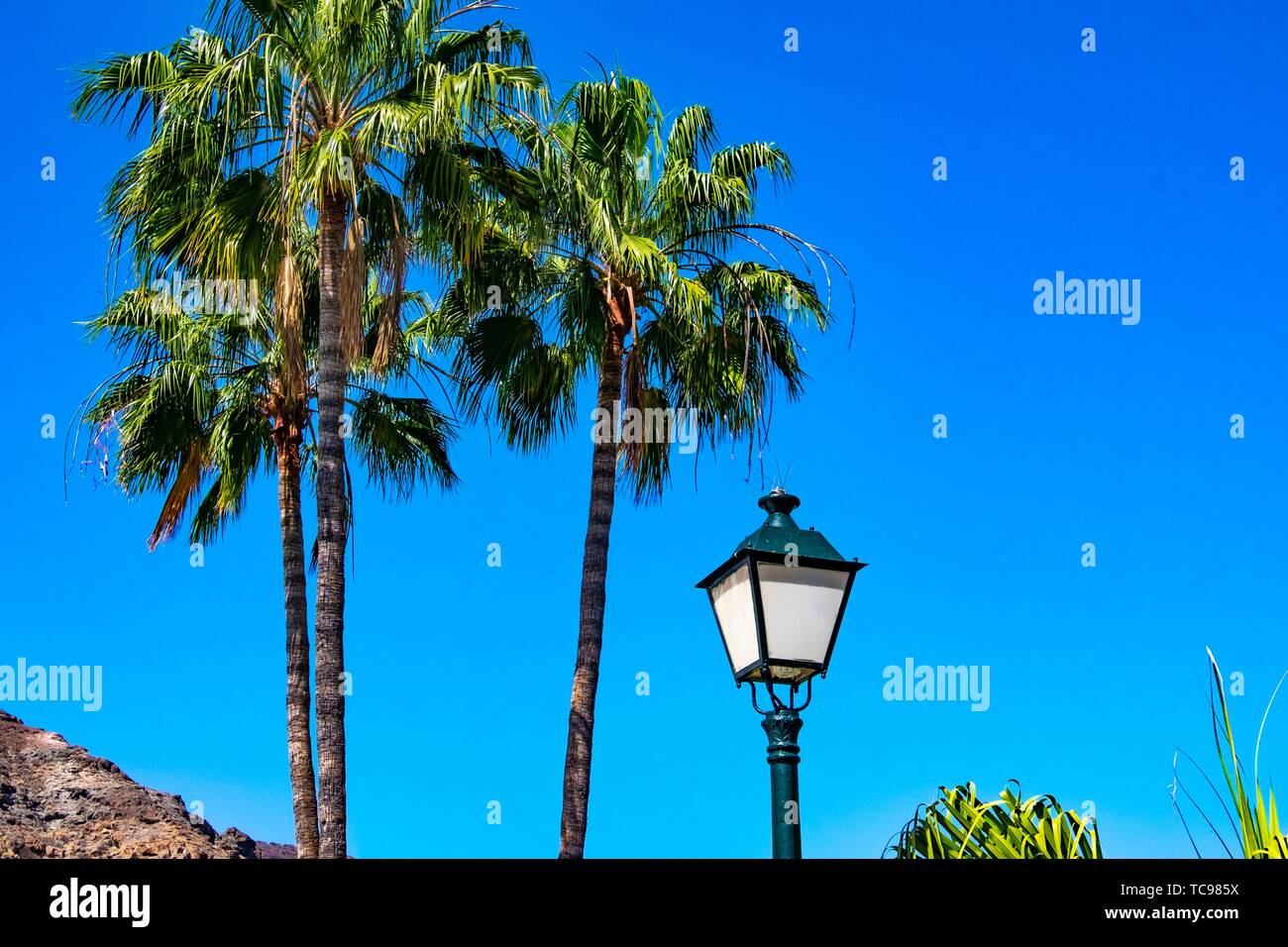 Cliff, lantarn and palm trees in Mogan, Gran Canaria, Canary Islands. Stock Photo